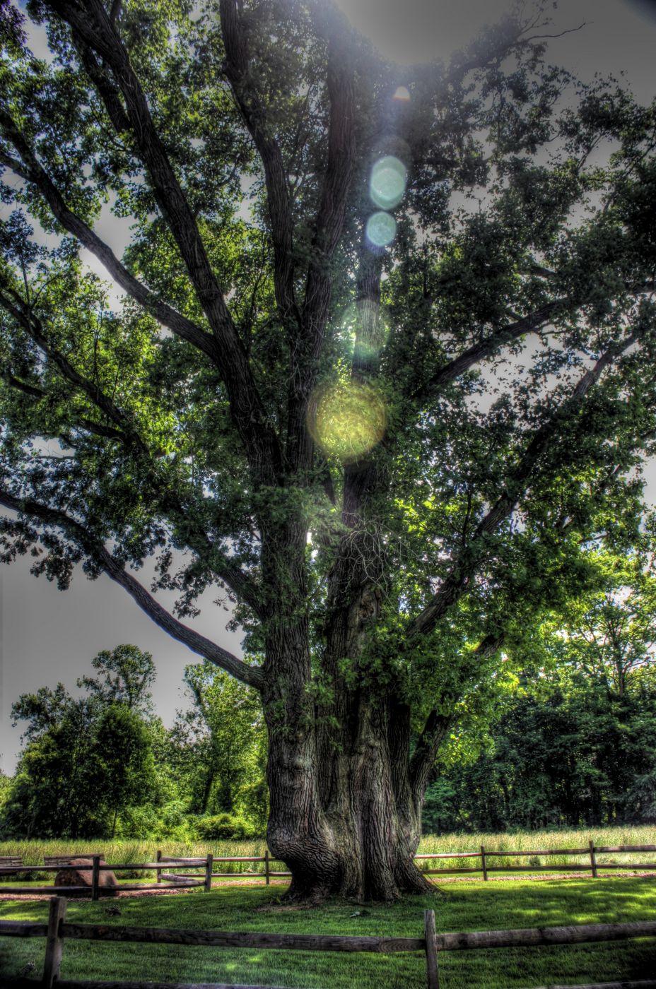 Signal Tree, USA