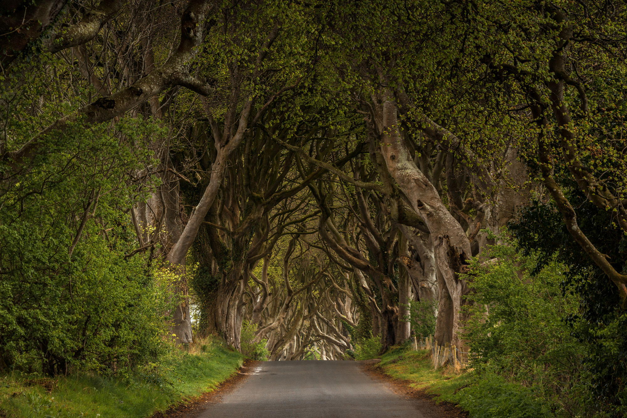 Dark Hedges, United Kingdom