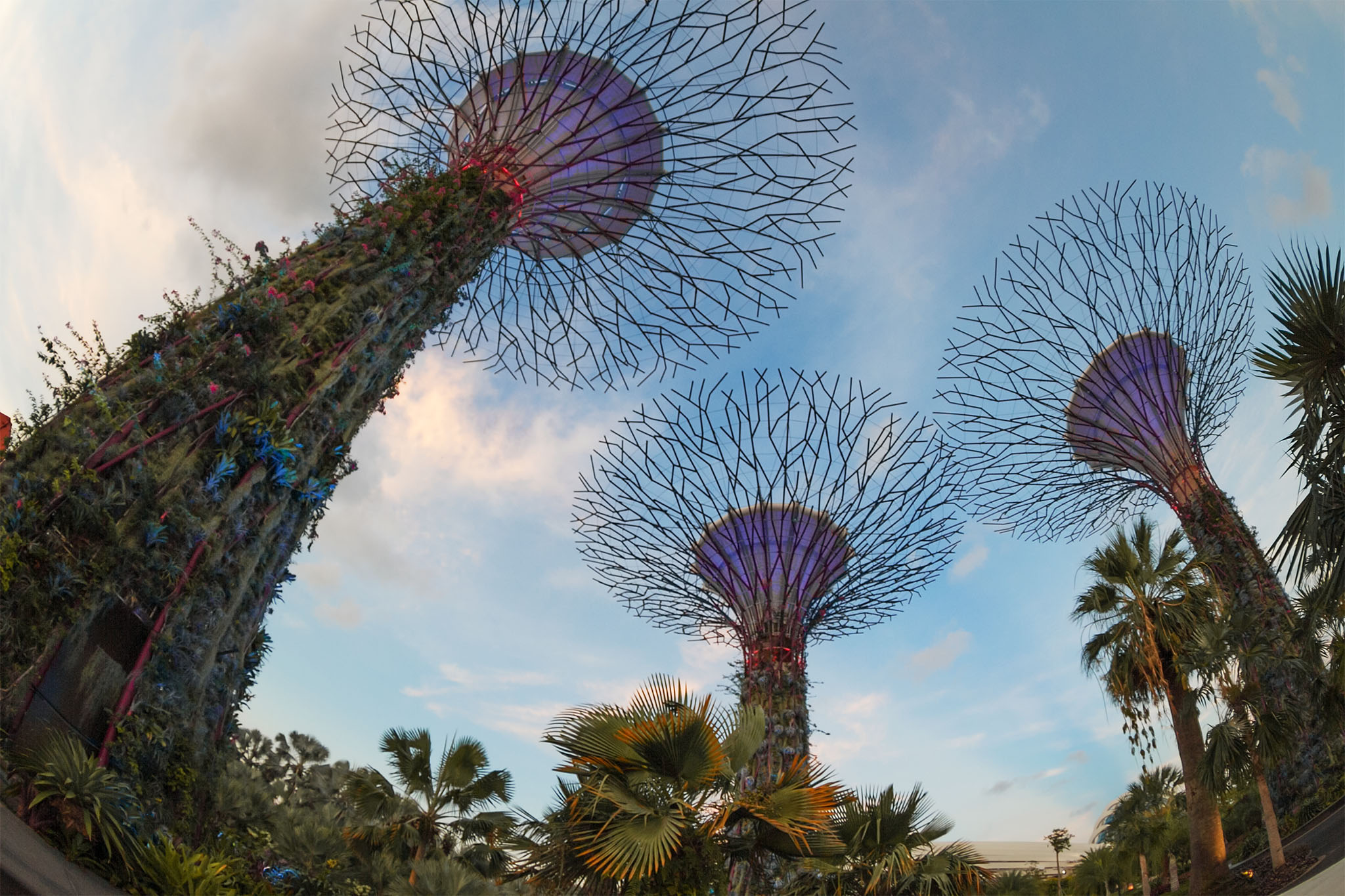 Gardens by the Bay SuperTree forest, Singapore, Singapore