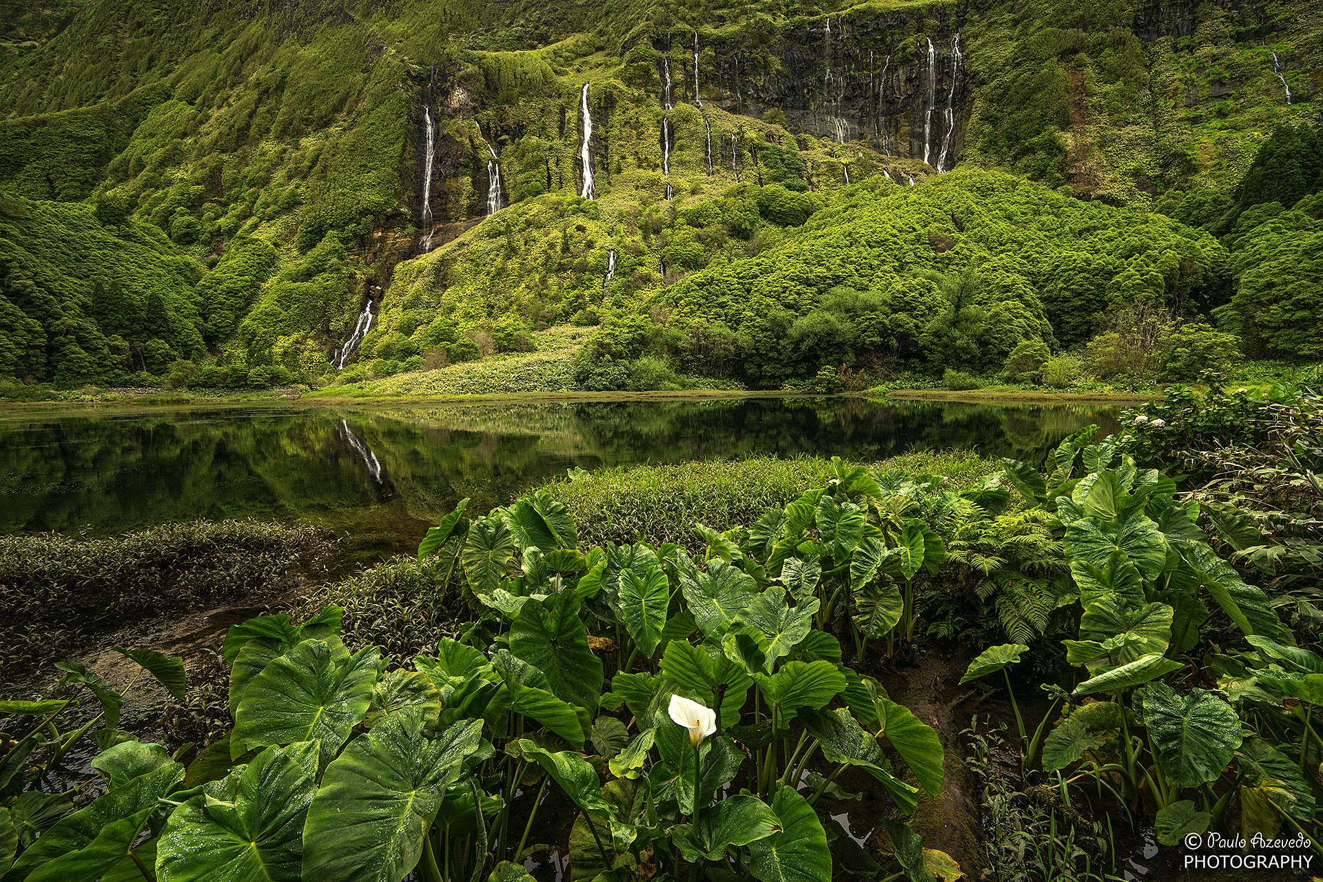 Poco da Alagoinha, Flores, Azores, Portugal