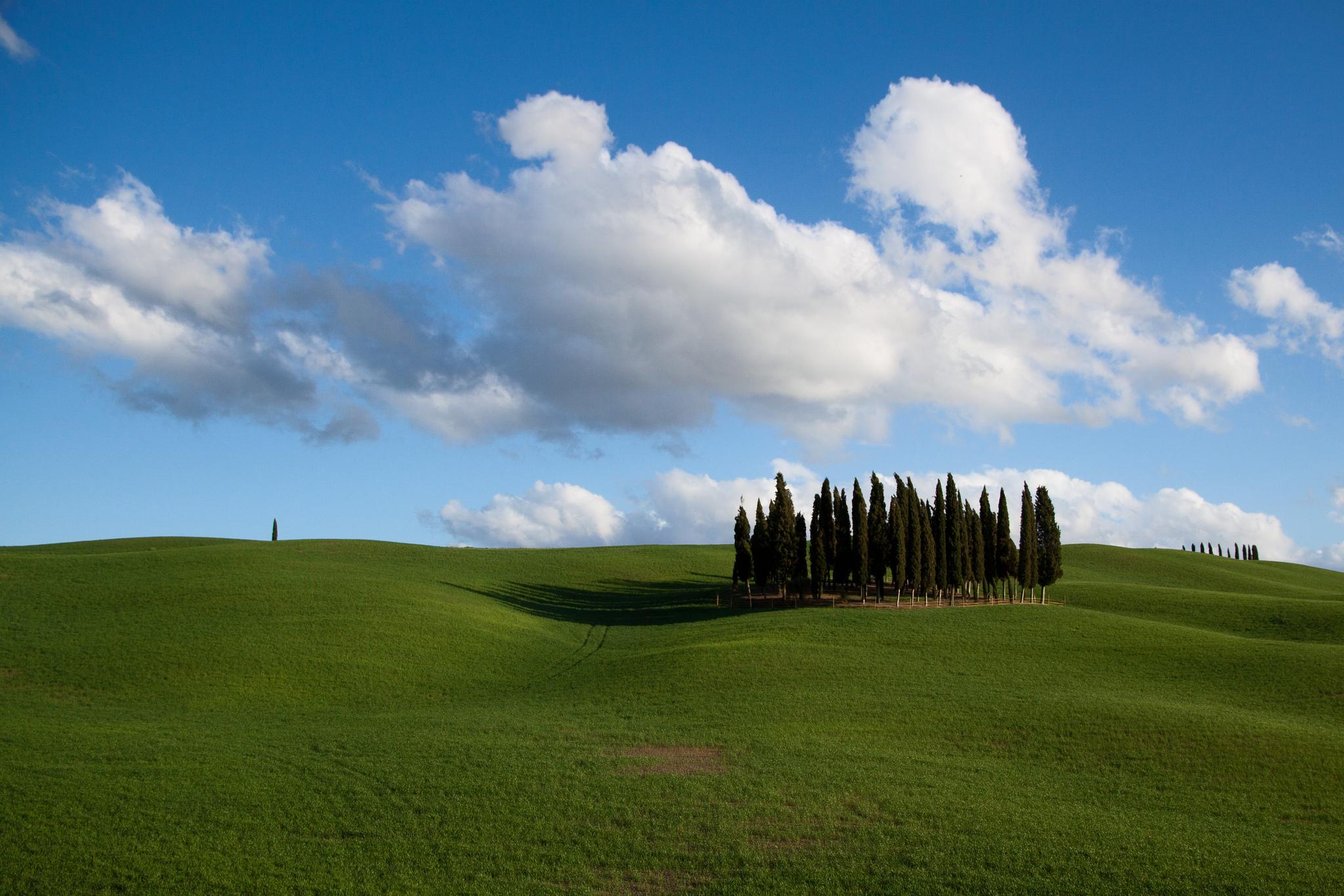 Tuscany Grove, Italy
