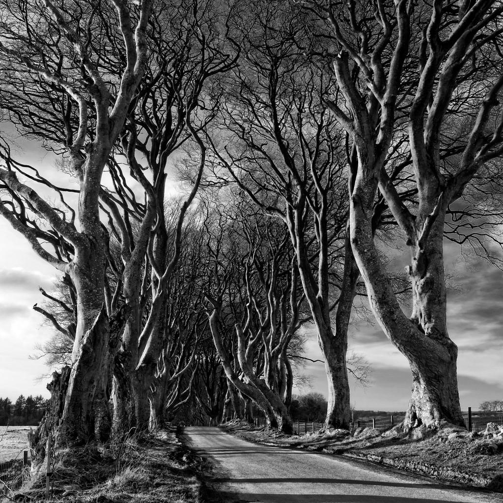 The Dark Hedges (Road), United Kingdom