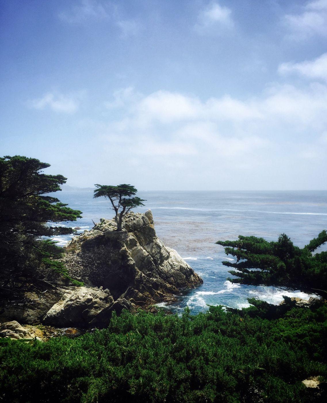 The Lone Cypress, USA