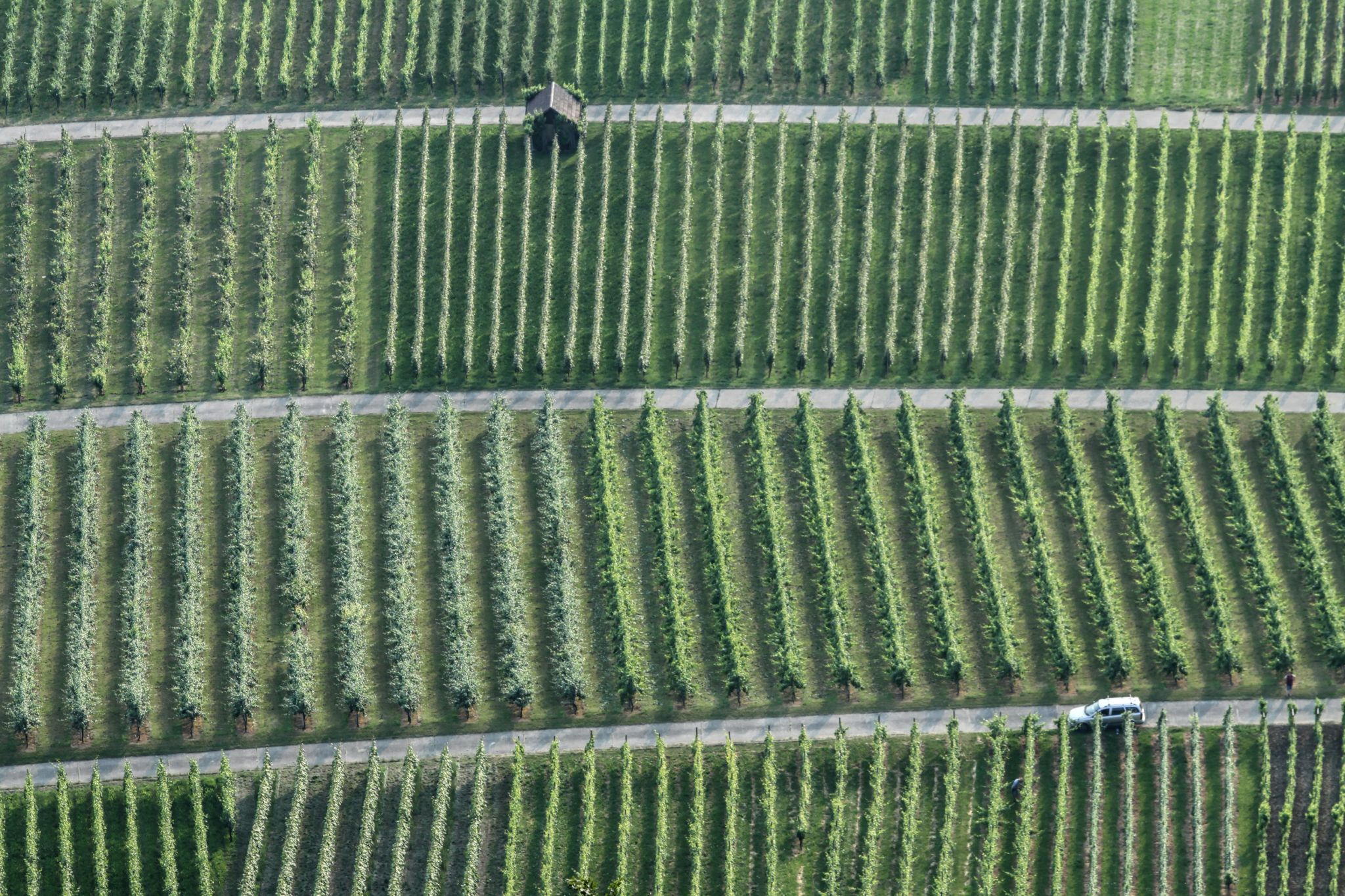 Vineyards, Hohenneuffen, Germany
