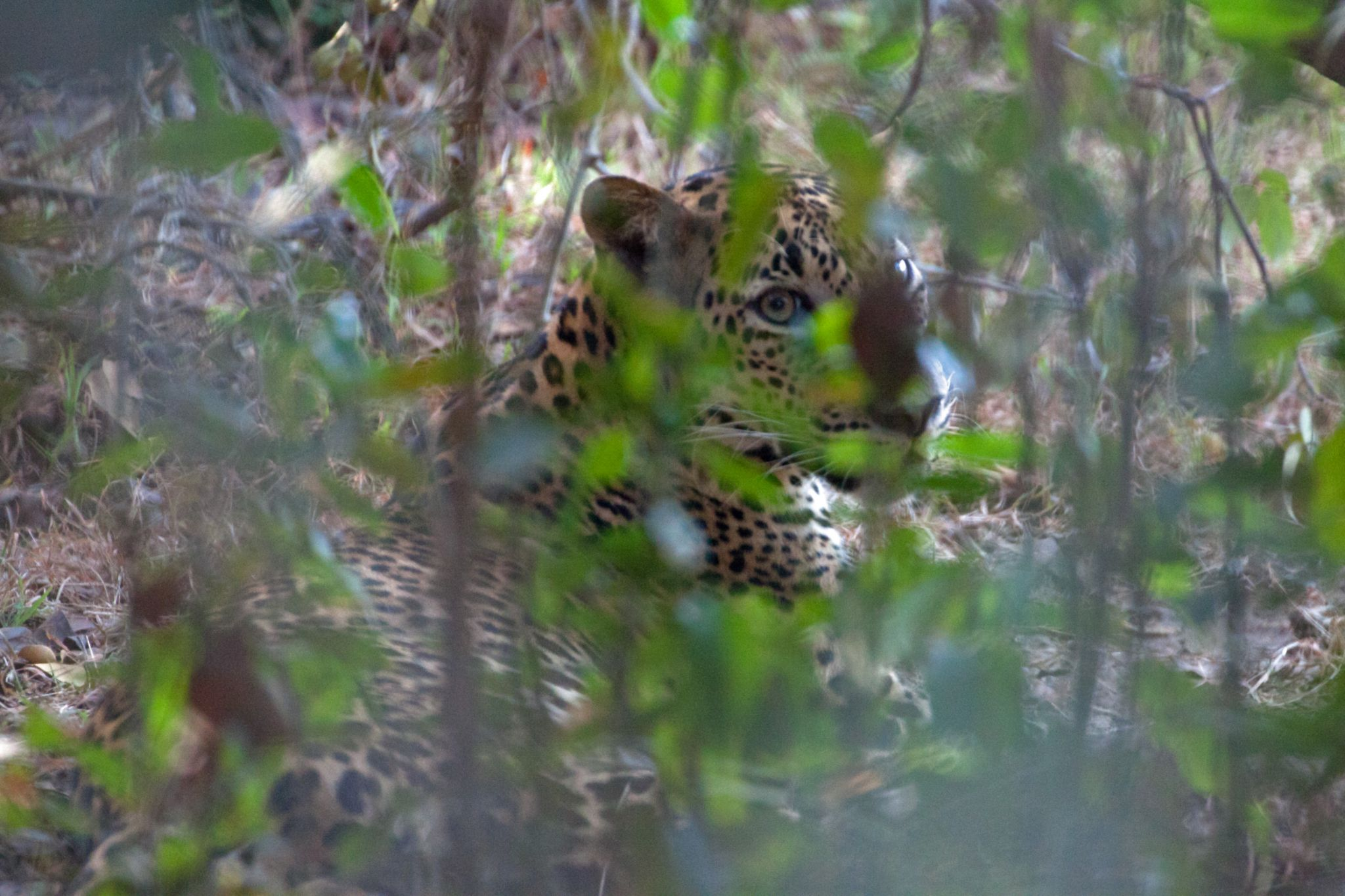 Wilpattu National Park, Sri Lanka