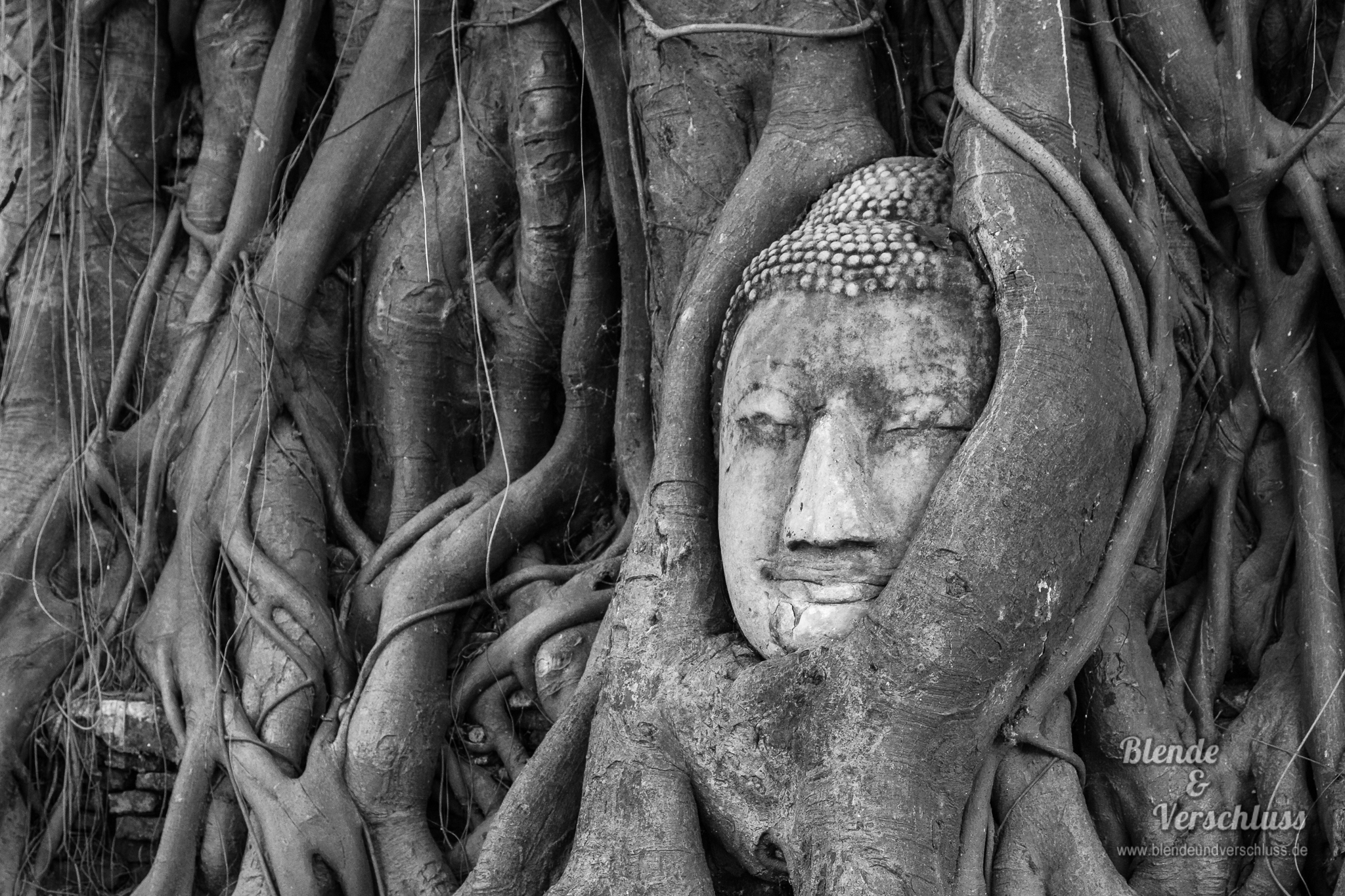 Buddha embedded in a Banyon Tree, Thailand