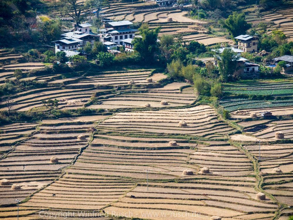 Reisterrassen in der Nähe von Punakha, Bhutan