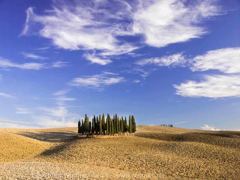 Zypressengruppe 'Santa Maria' bei San Quirico d'Orcia, Italy