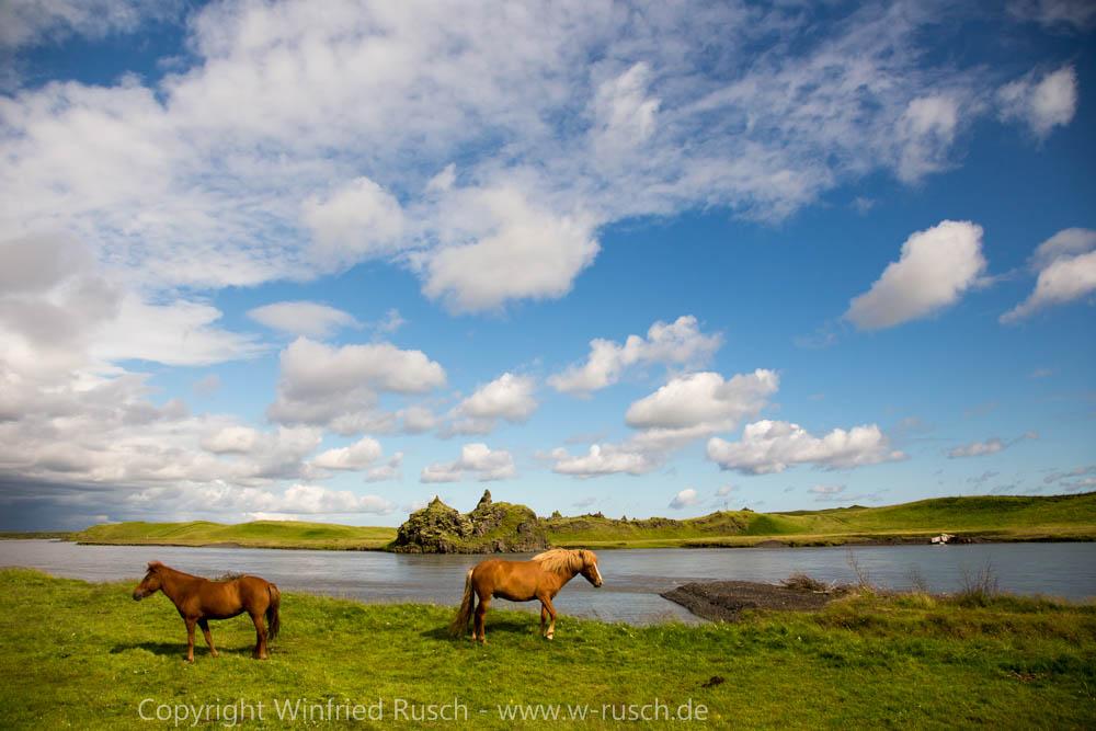 Islandpferde bei Kirkjubæjarklaustur, Iceland