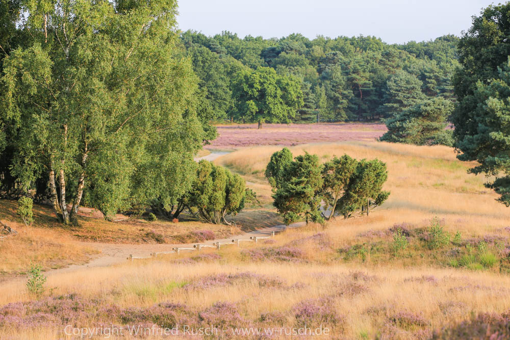 Westruper Heide, Germany