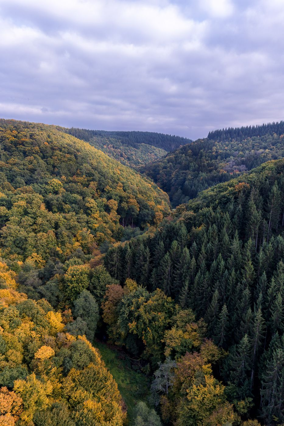 View from Geierlay, Germany