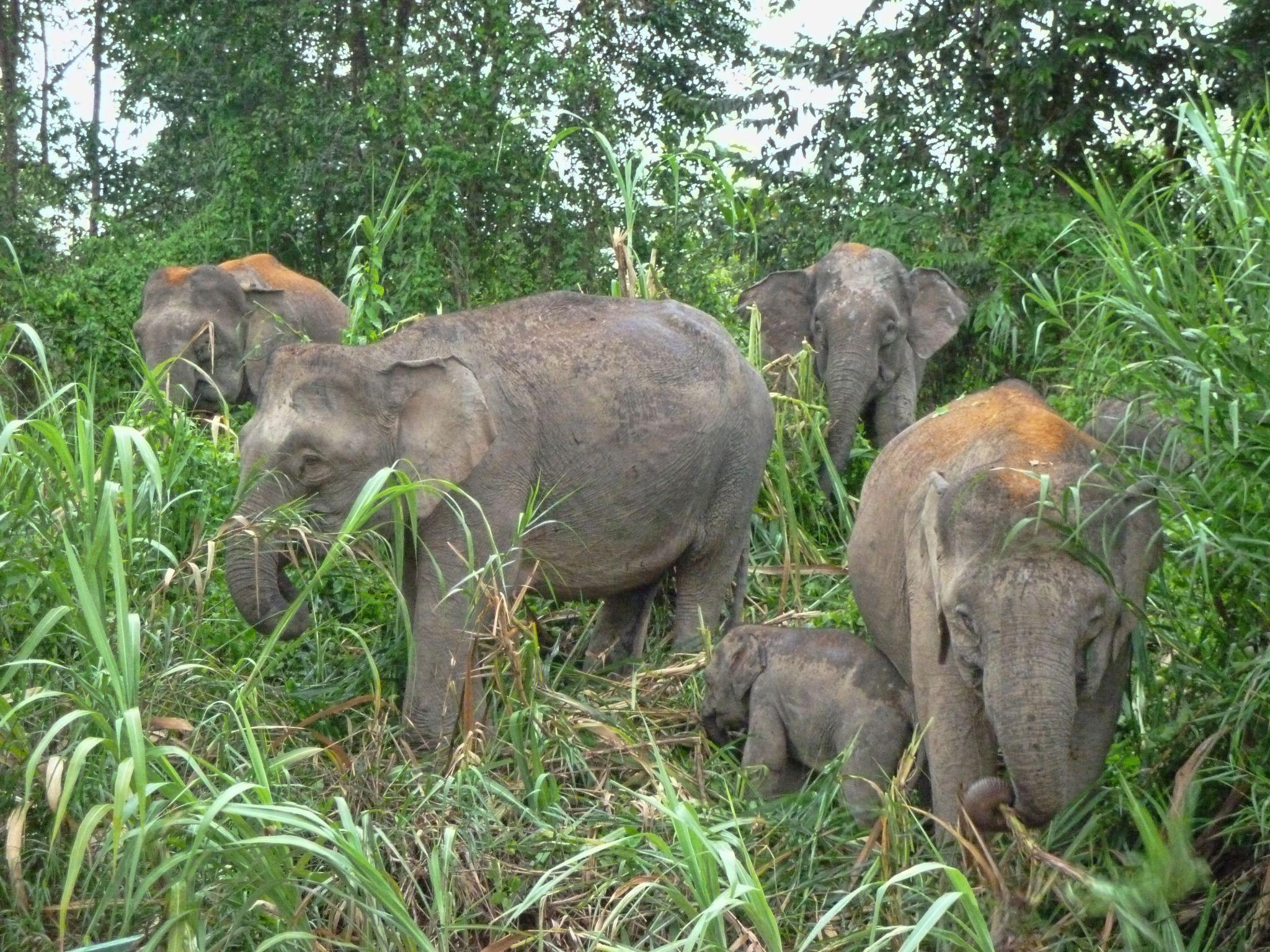 Kinabatangan Wildlife Sactuary, Malaysia