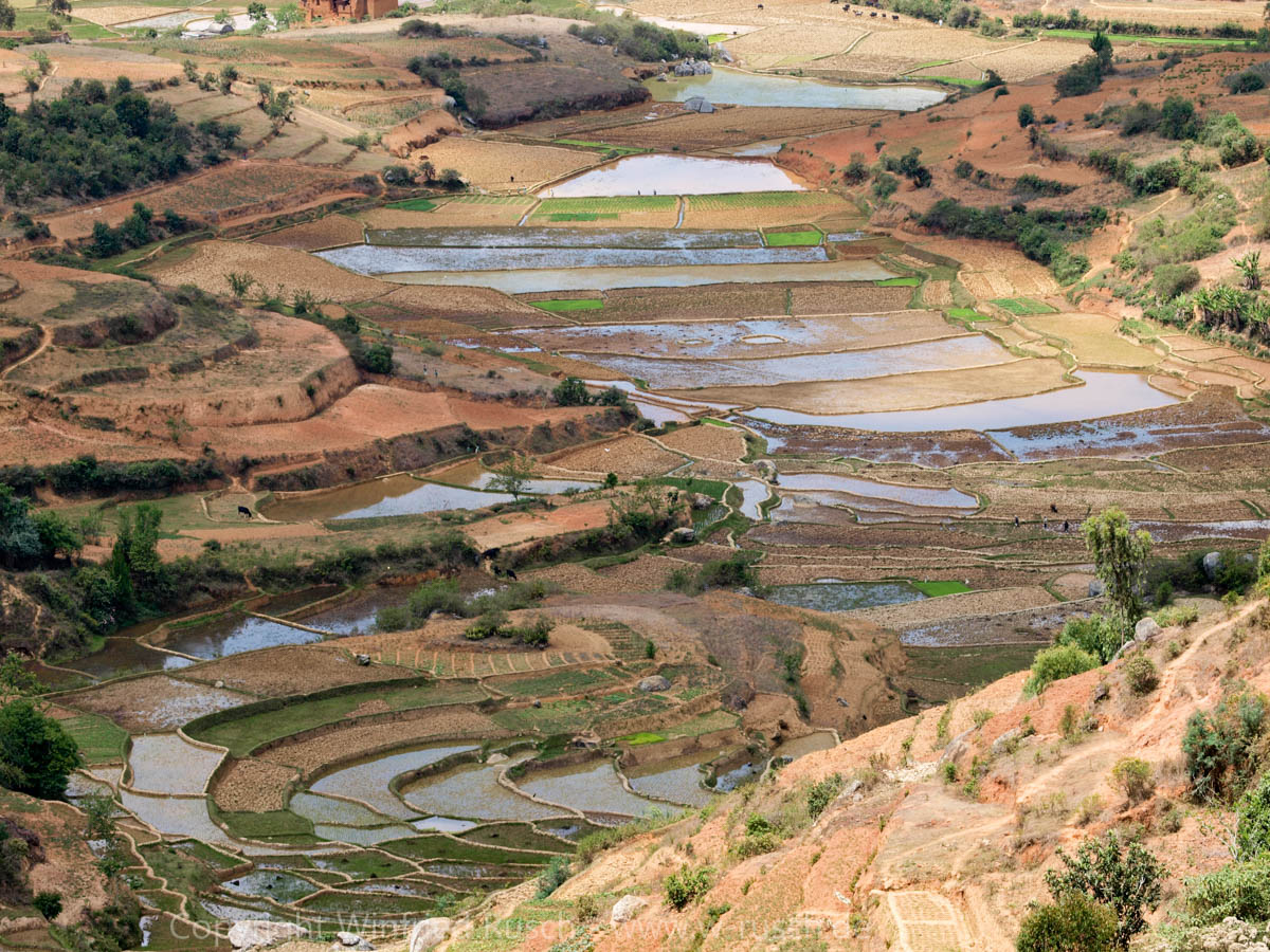 Reisfelder in der Nähe von Ambositra, Madagascar