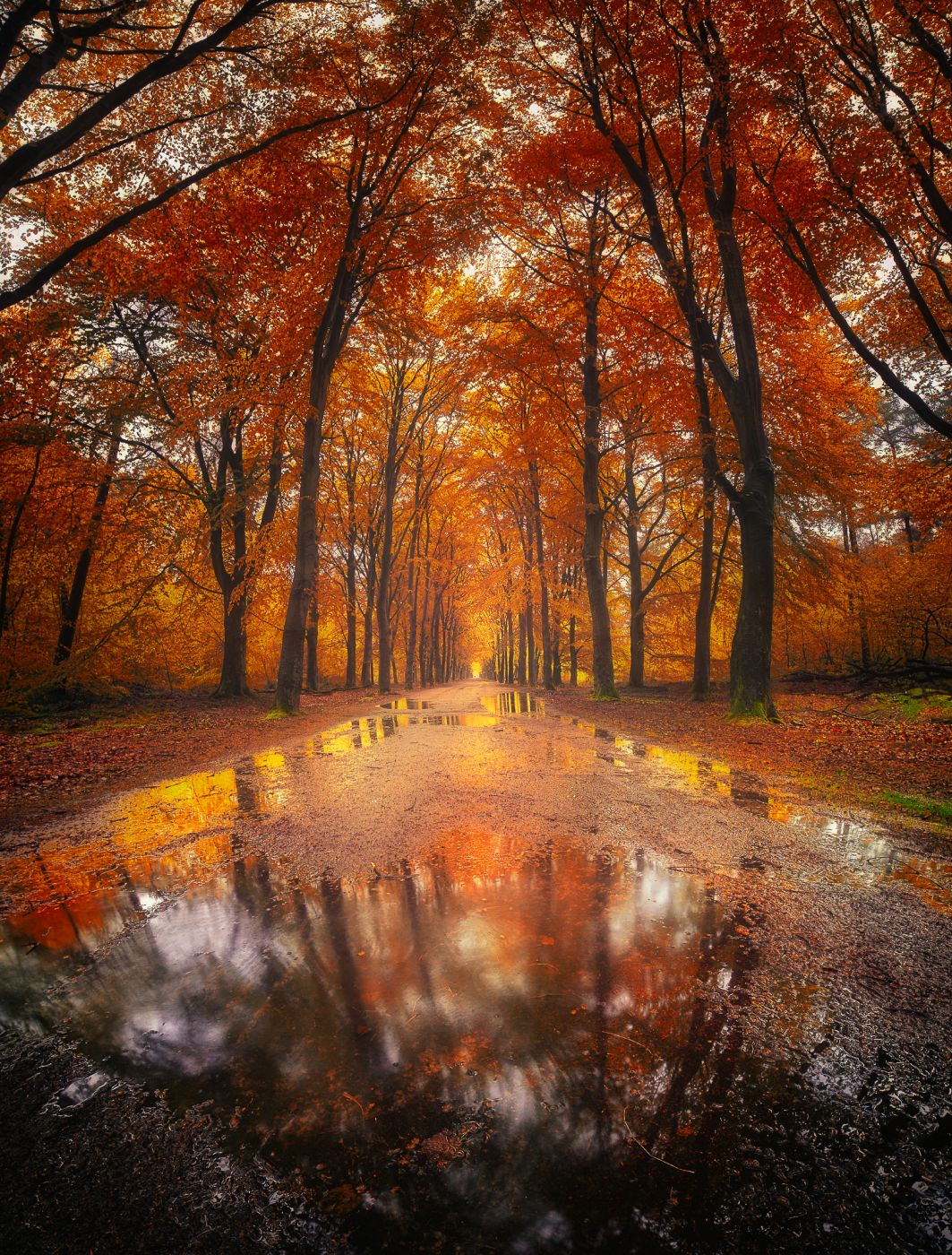 Magical autumn forest in Rijsterbos, Netherlands