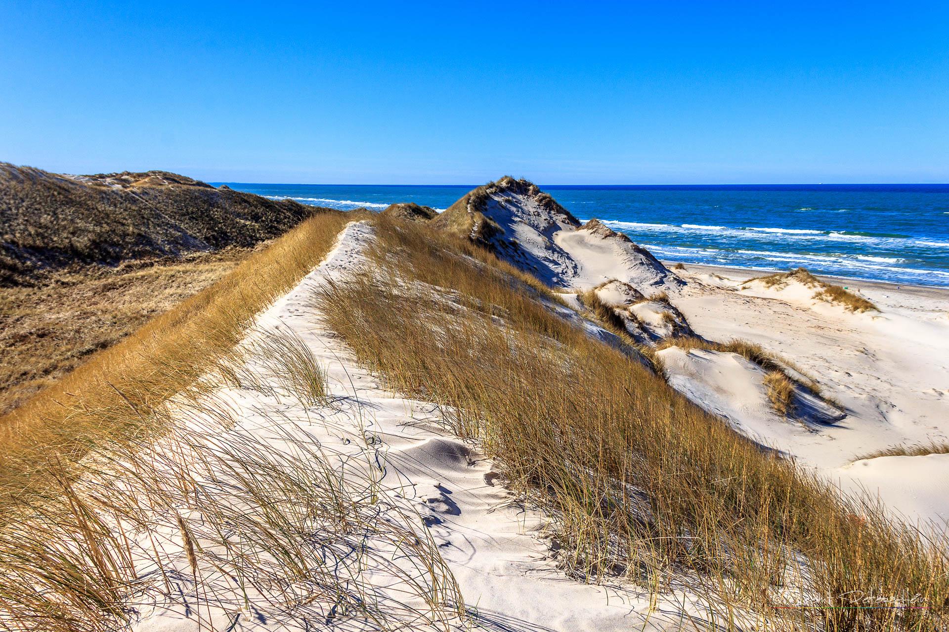 Dunes at Skagen, Denmark