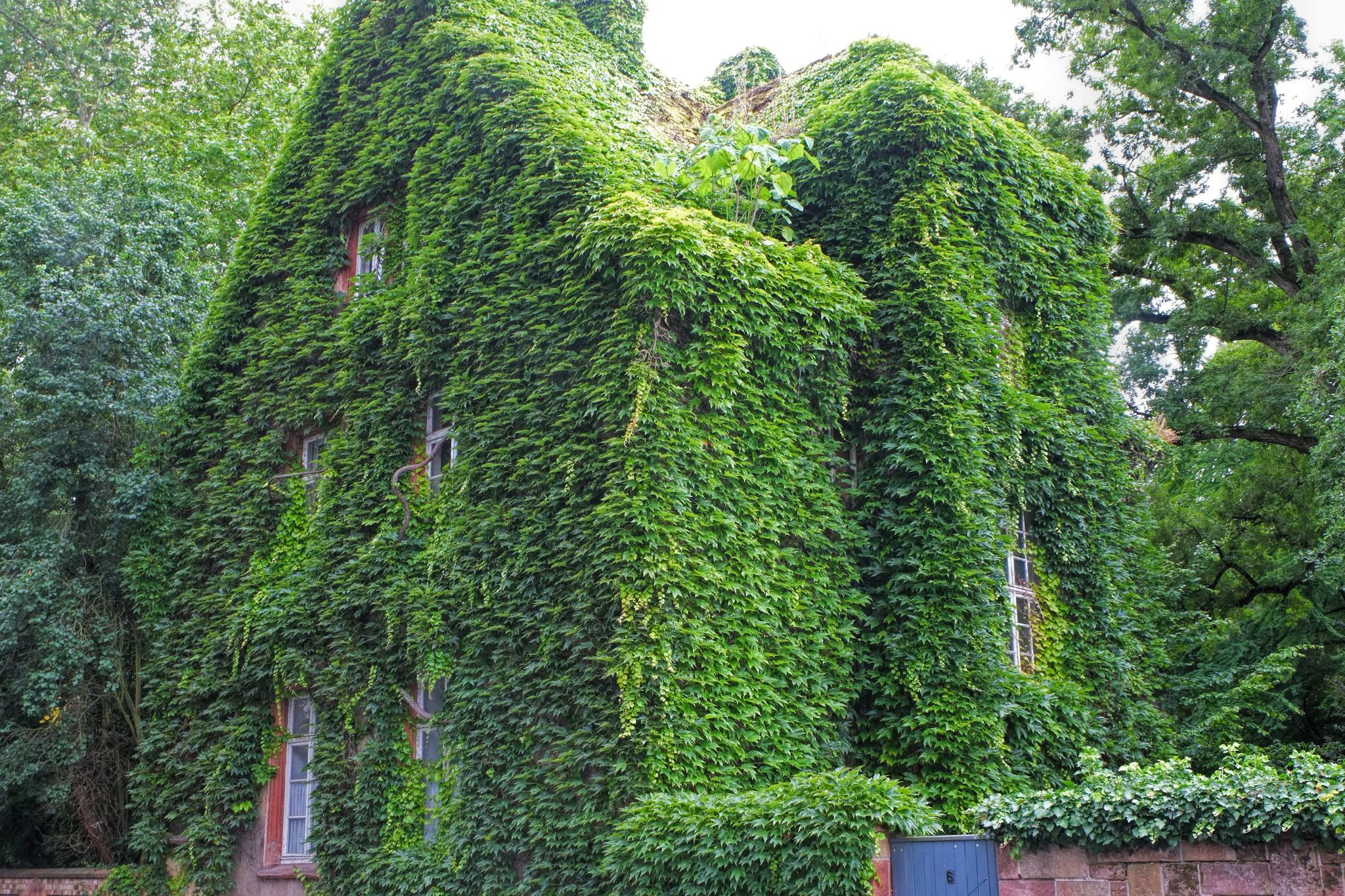 The green house, Gießen, Germany