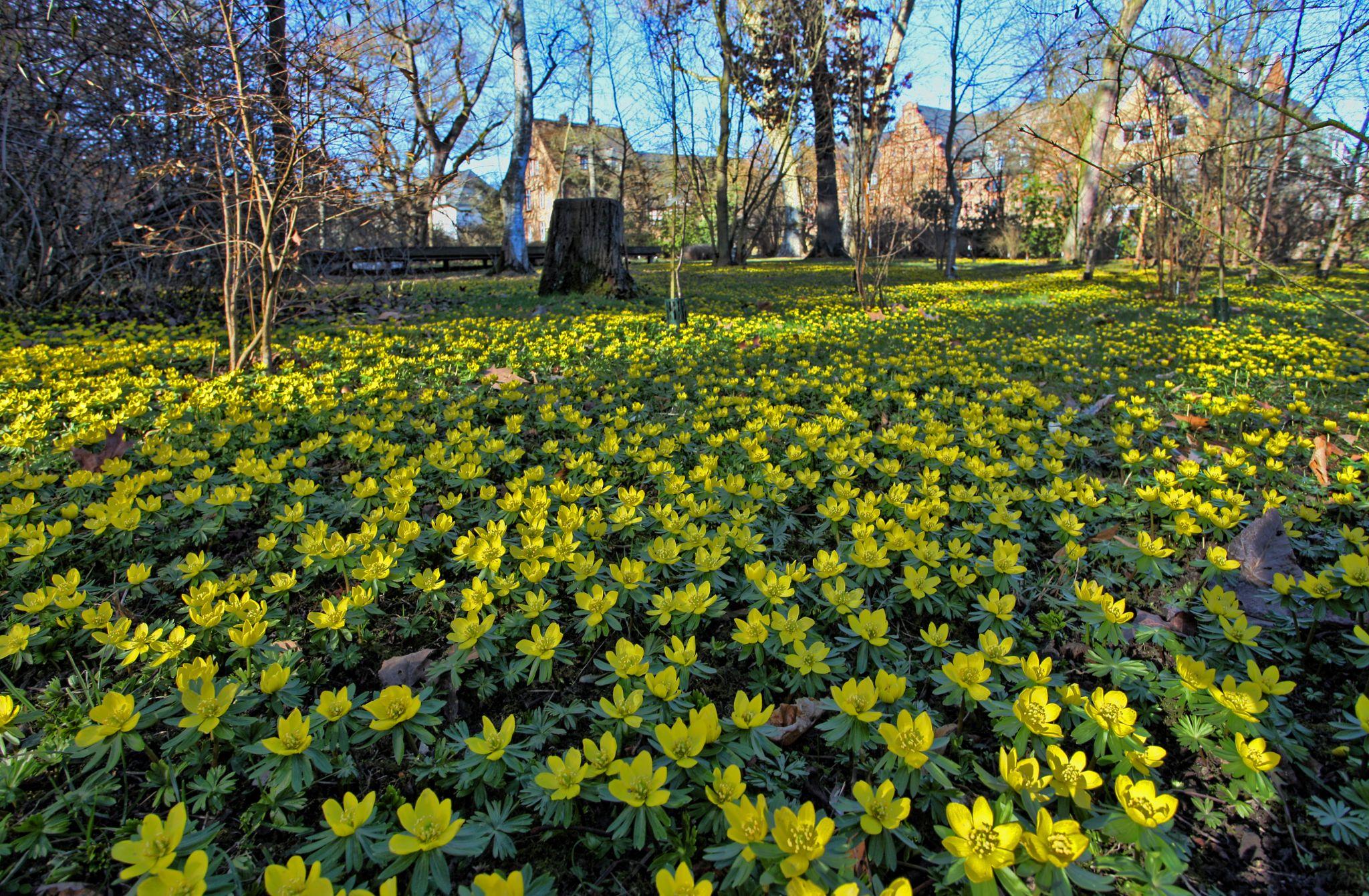 Botanical Garden, Giessen, Germany