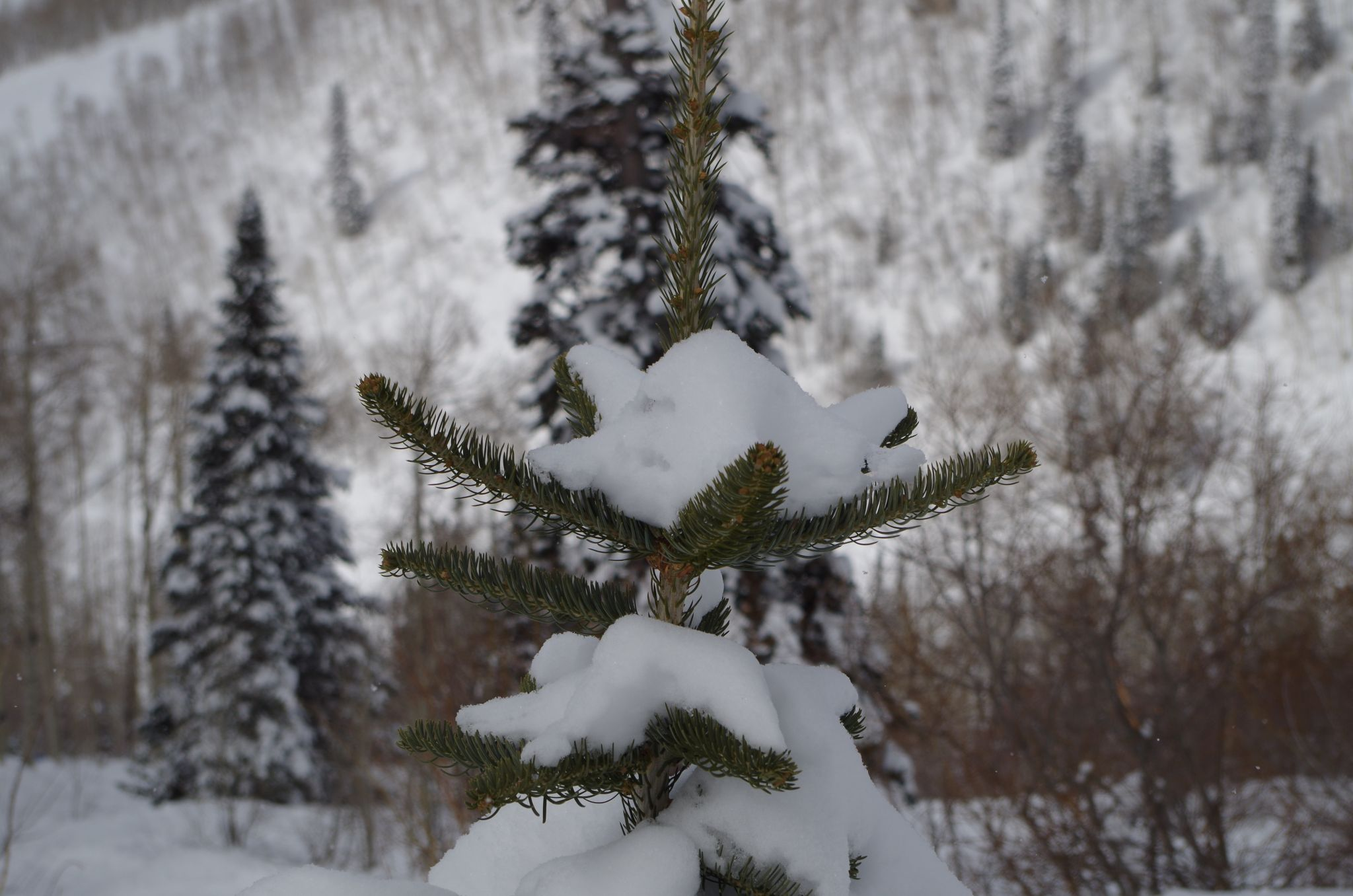Trees, USA