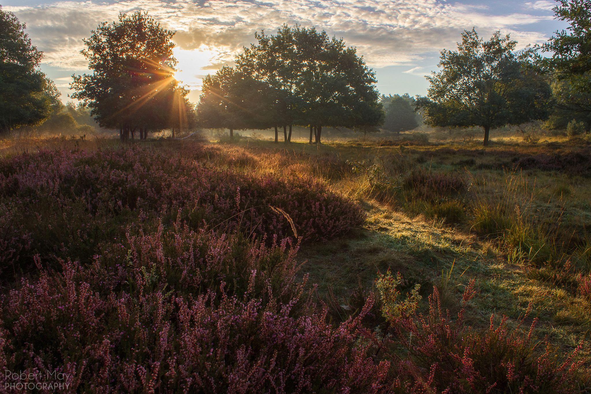 Wahner Heide, Germany