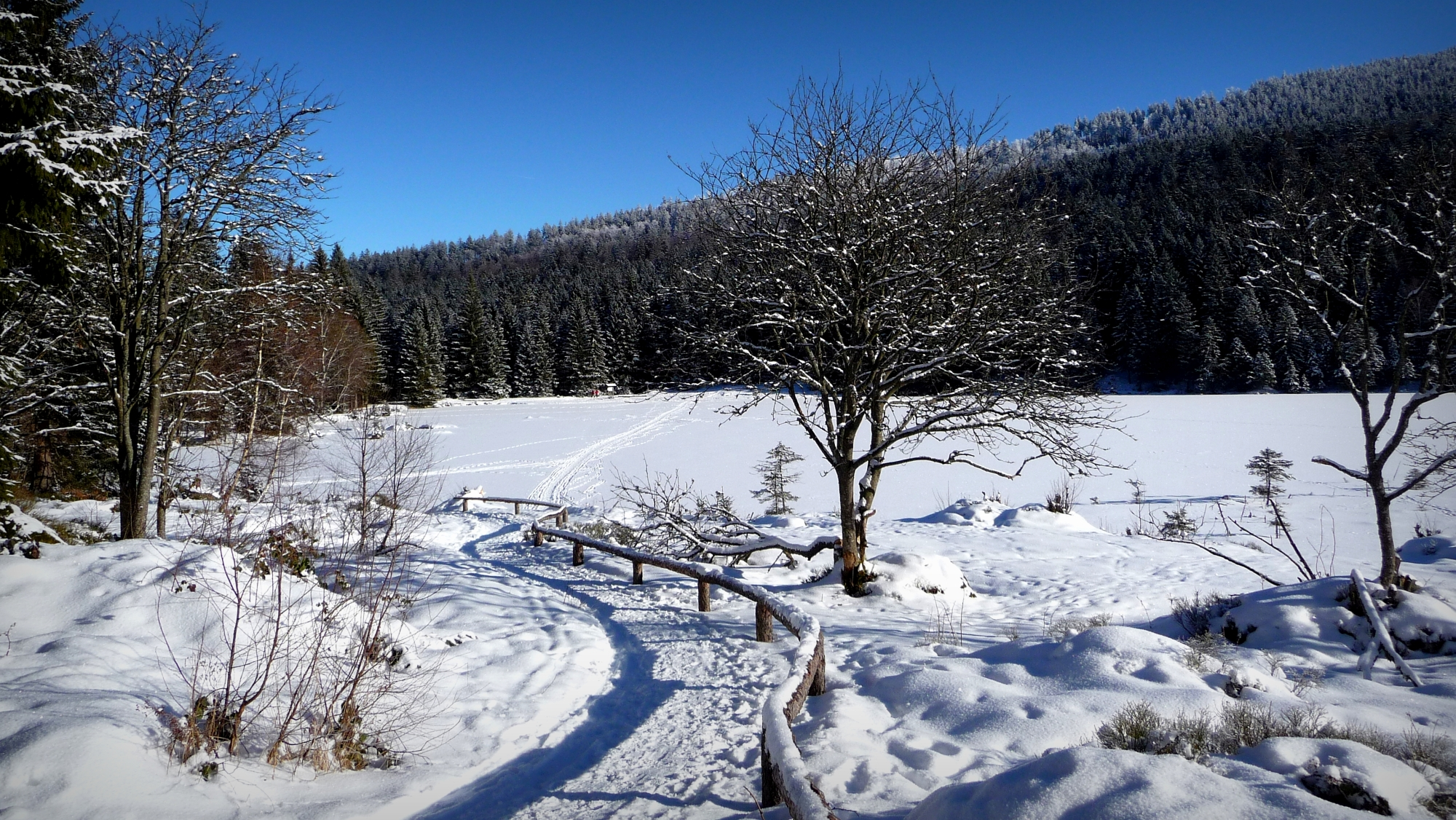 In the Bavarian Forest, Germany