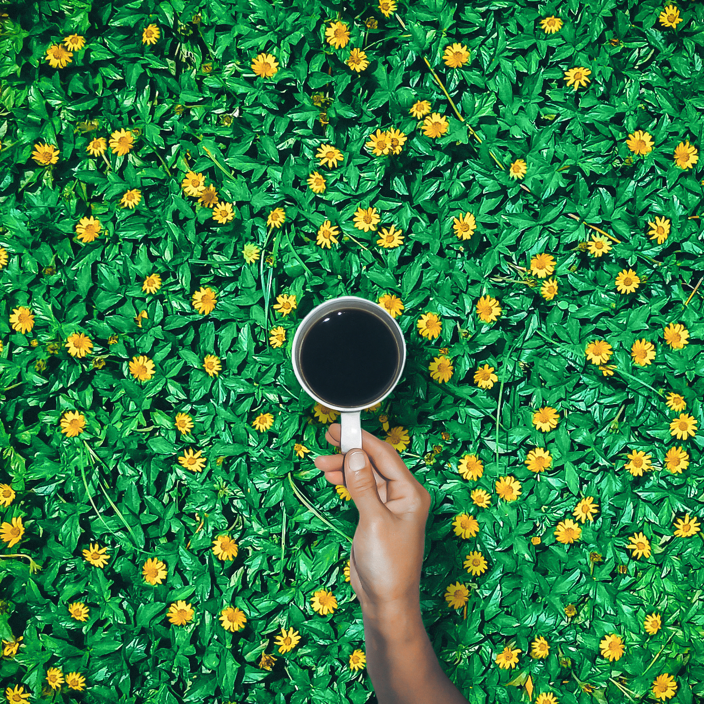 smell of flowers and love for black tea, India