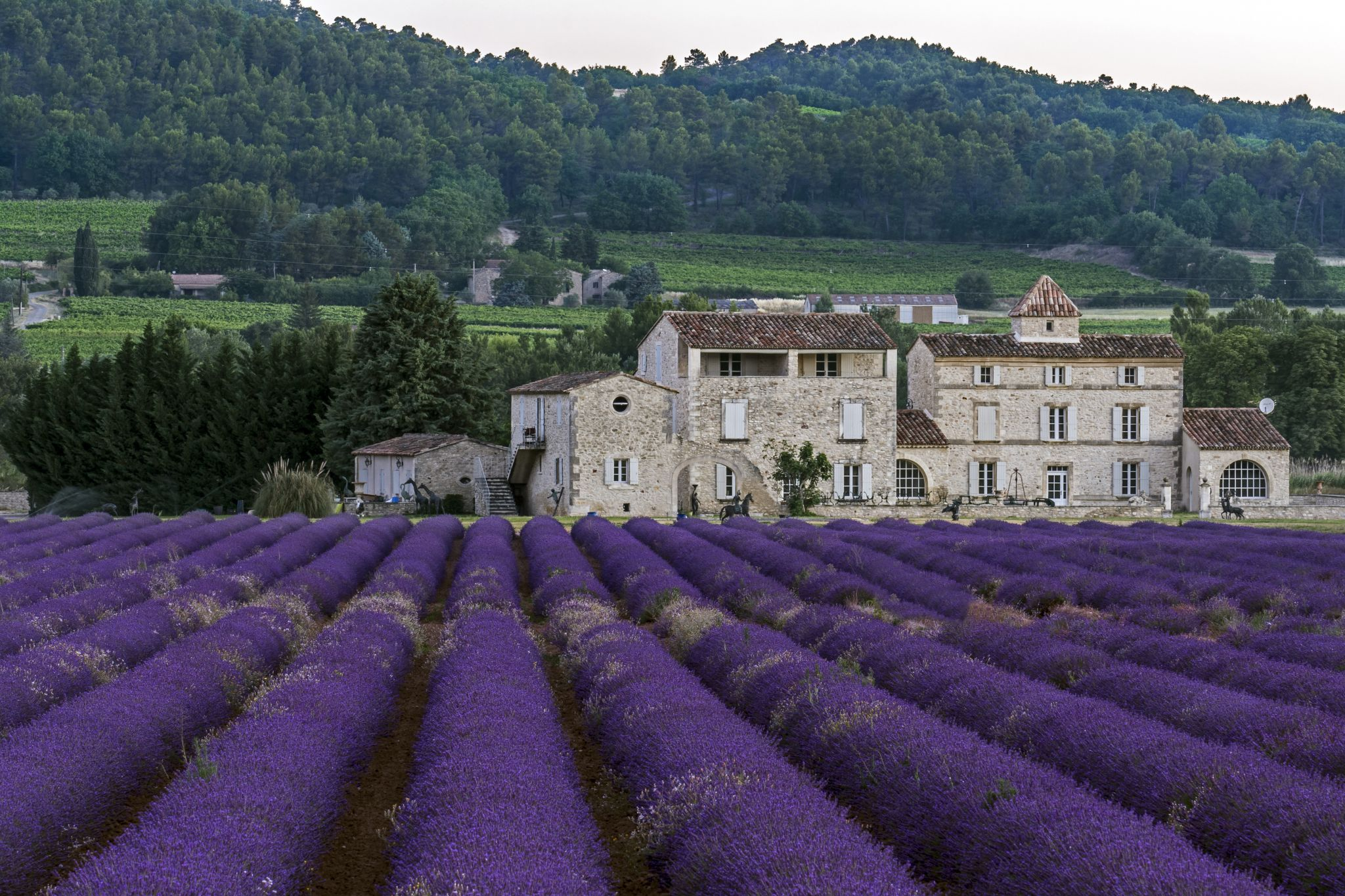 Lavender Fields and the Farmhouse, France