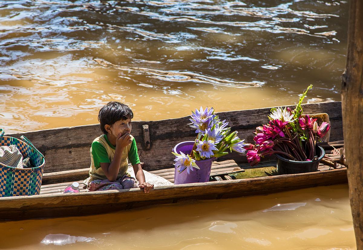 Lotosblumen, Myanmar