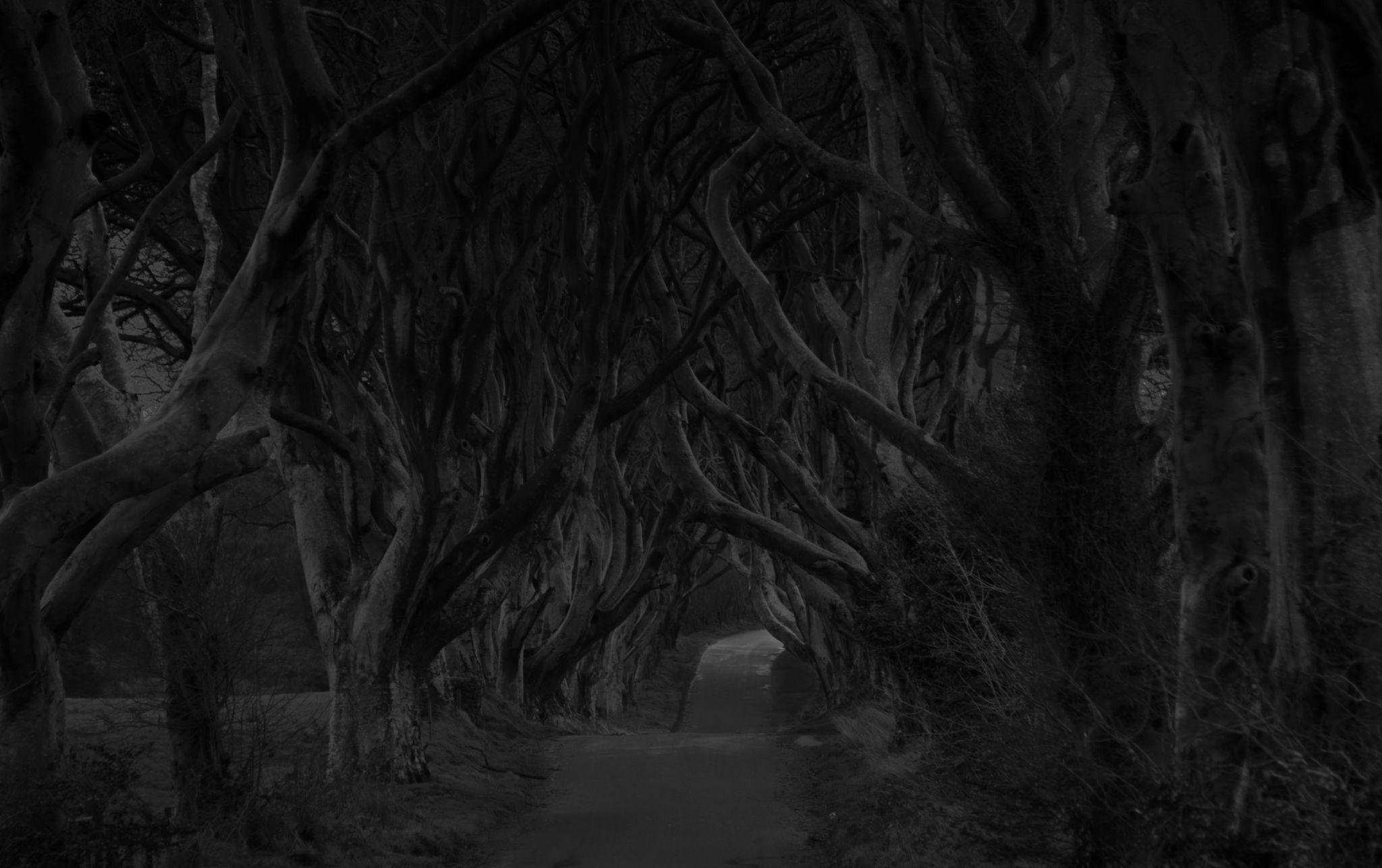The Dark Hedges, United Kingdom