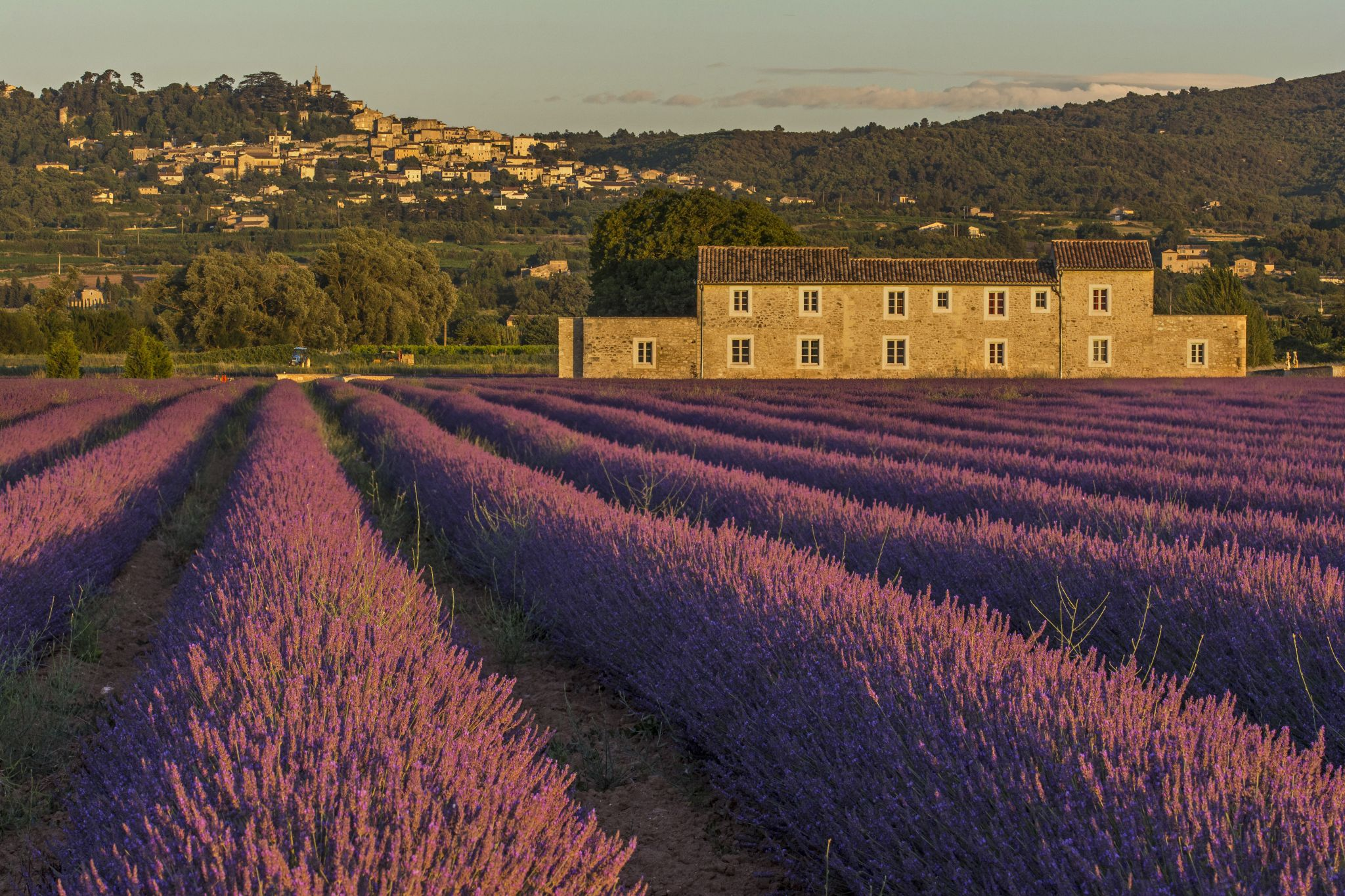 The Lavender Fields of Bonnieux, France