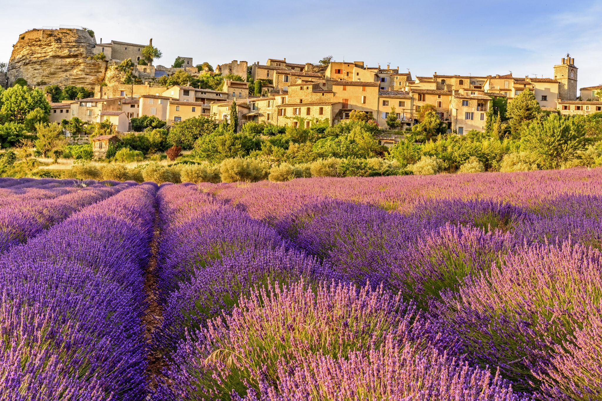 The Lavender Fields of Saignon, France