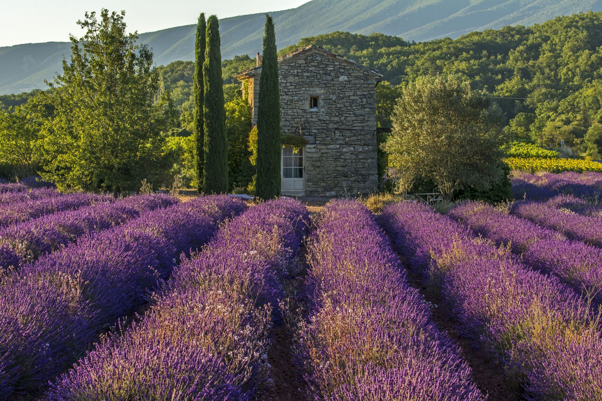 The Old Stone House in Fields of Lavender, France