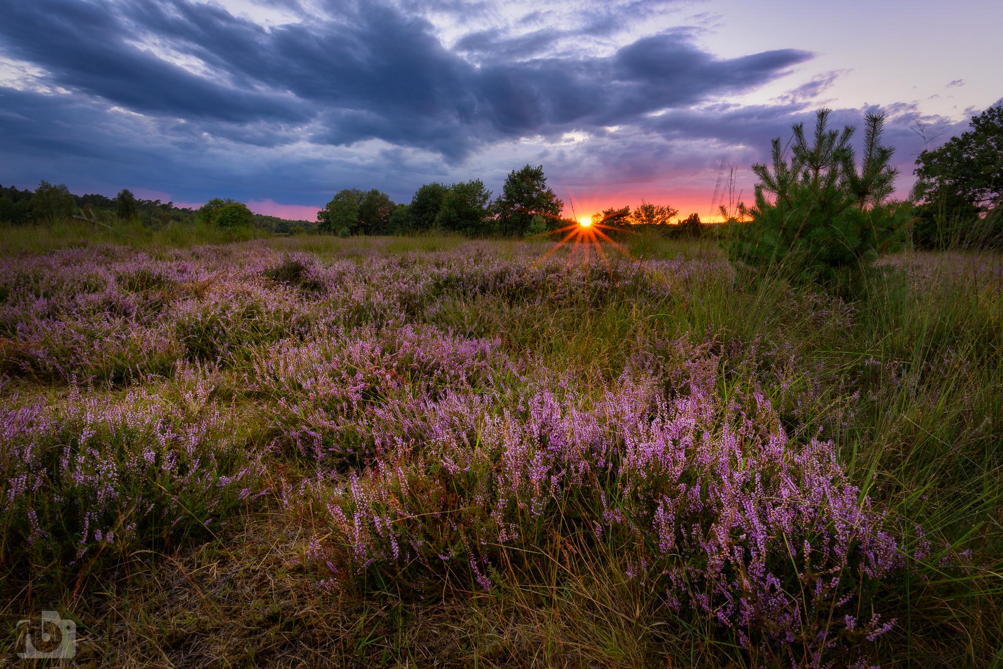 Elmptaler Heide (elmptaler heath), Germany