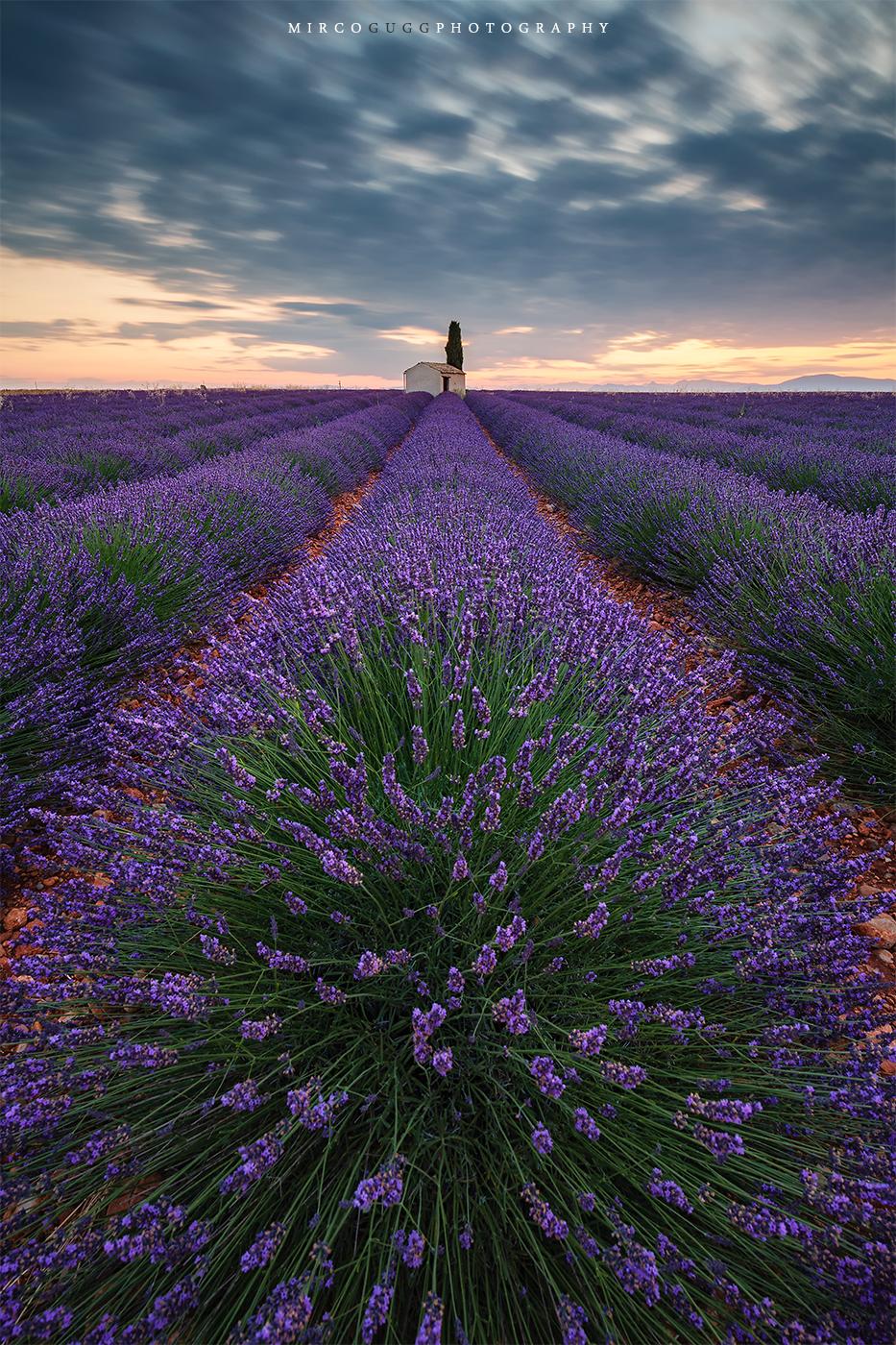 Lavender Fields Valensole, France