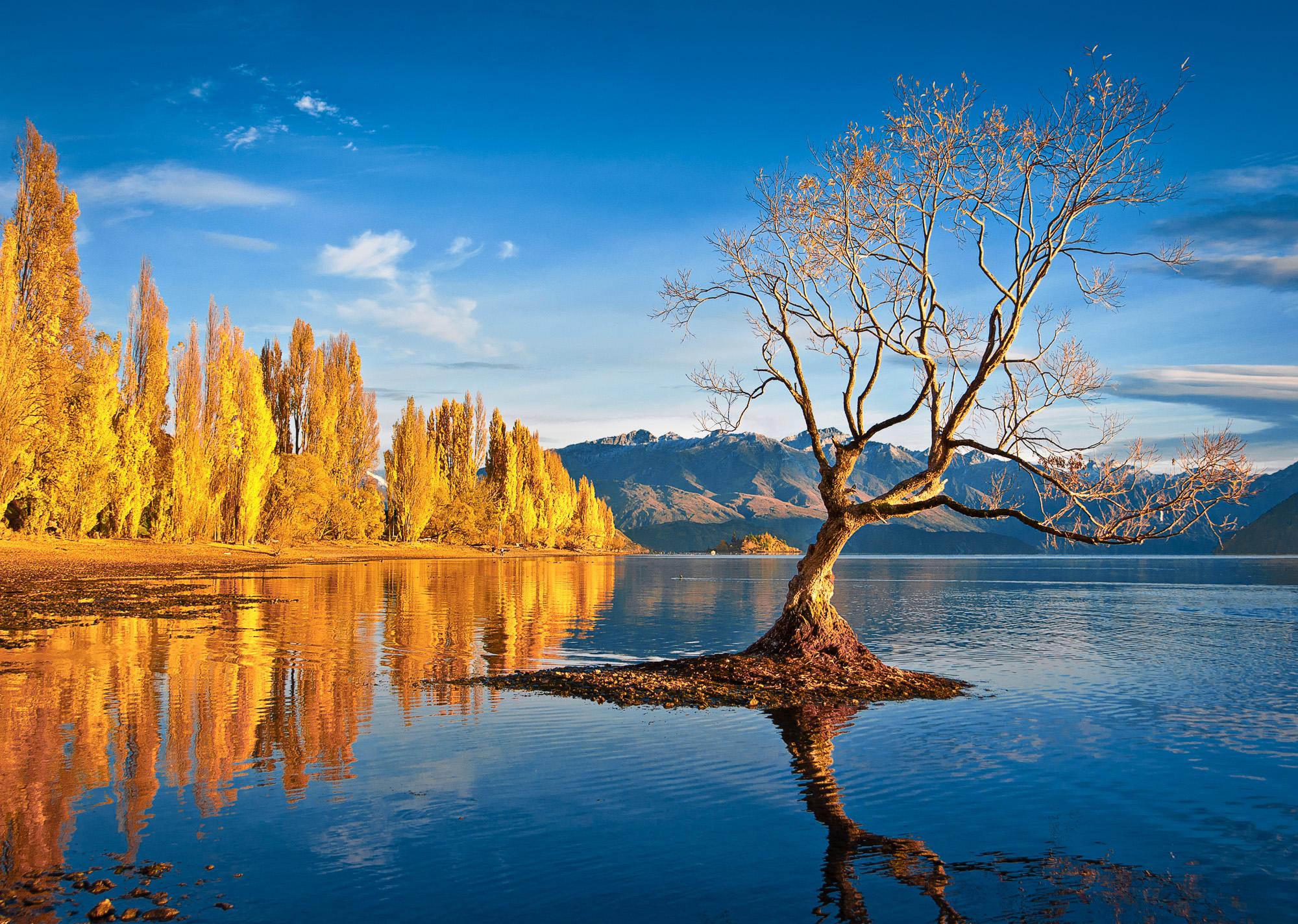 That Wanaka Tree, Otago, New Zealand