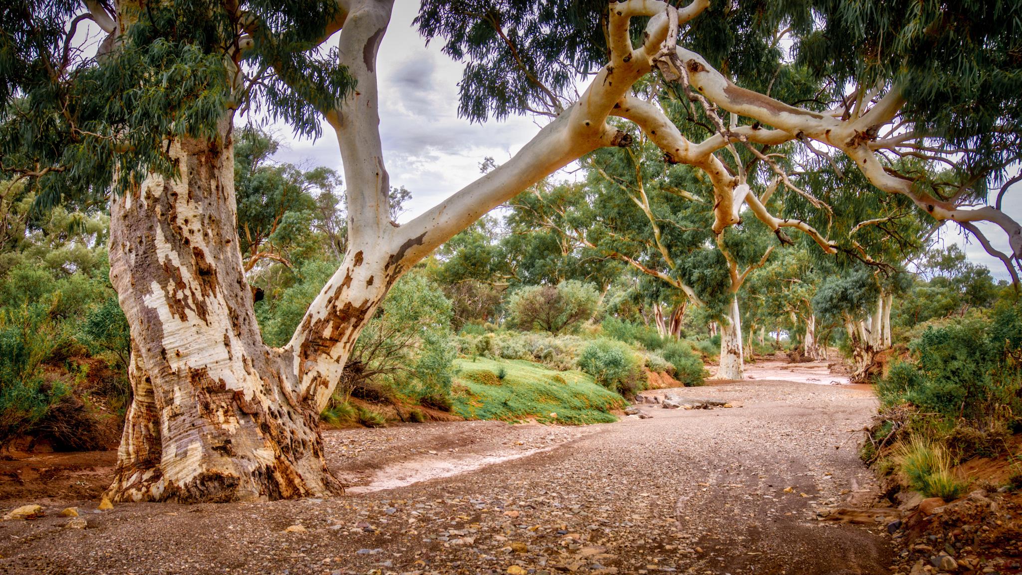 Warrioota Creek at Beltana, Australia