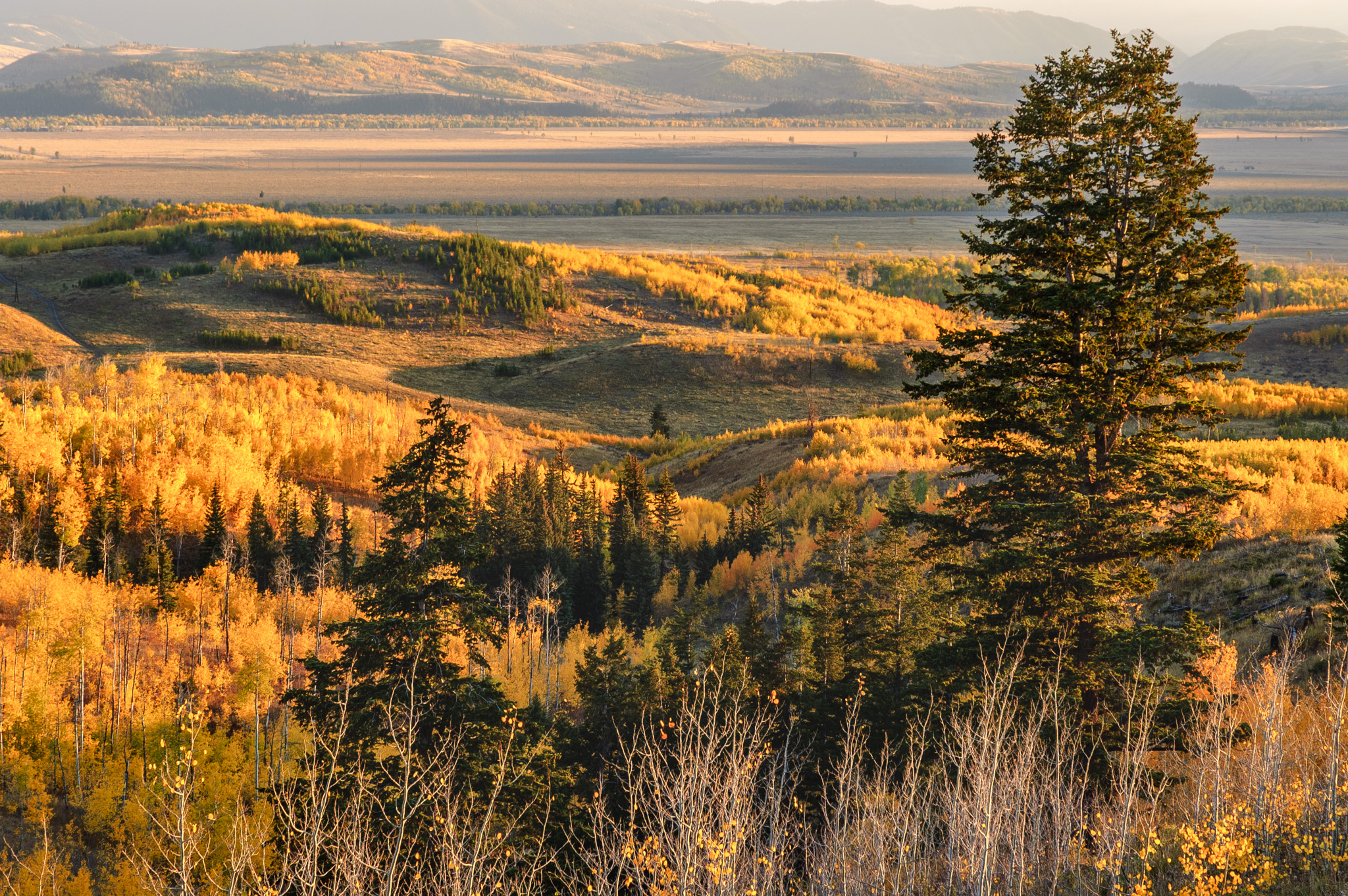 Shadow Mountain Vista, Wyoming, USA