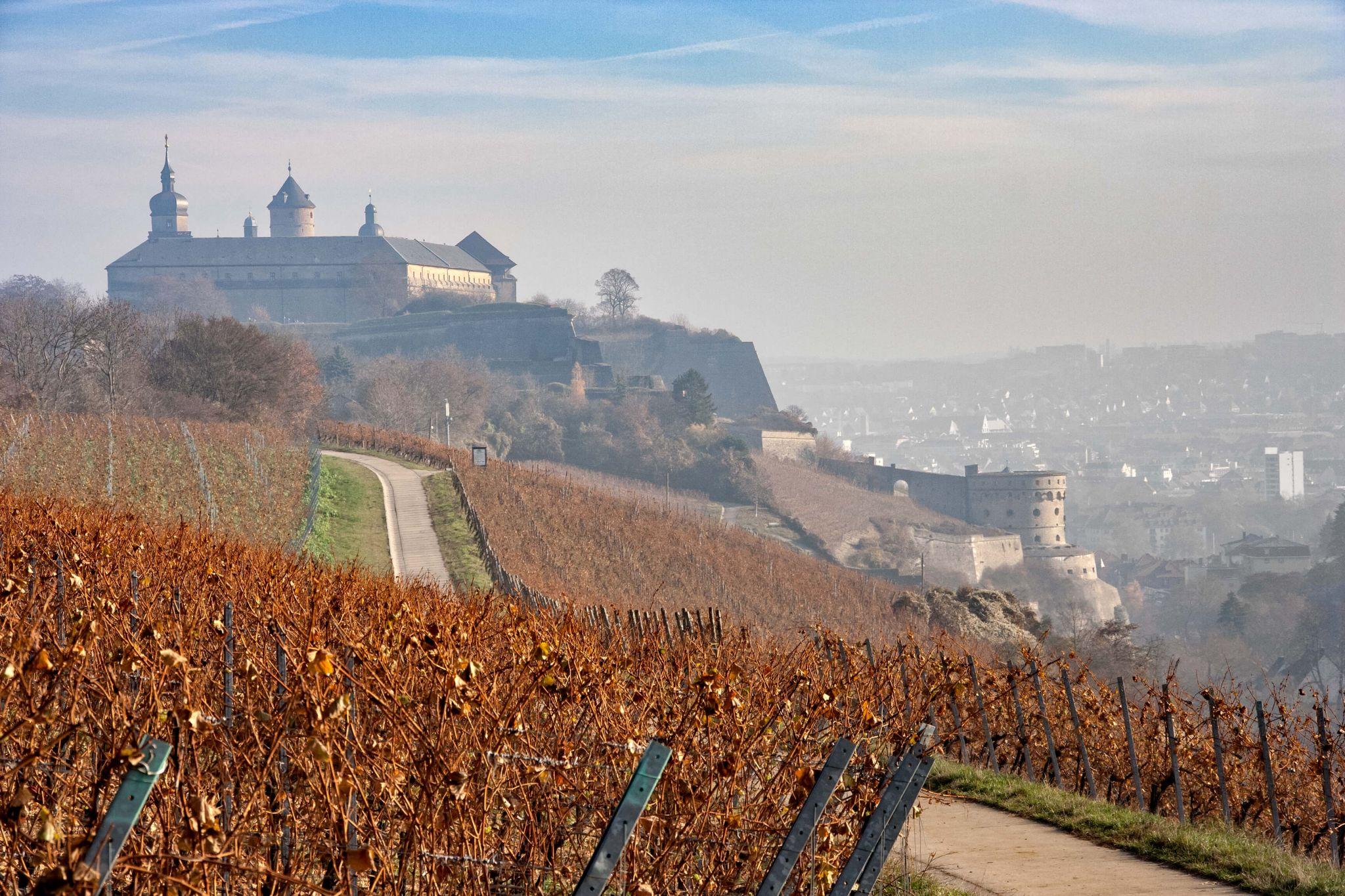 Vineyard and Festung Marienberg, Germany