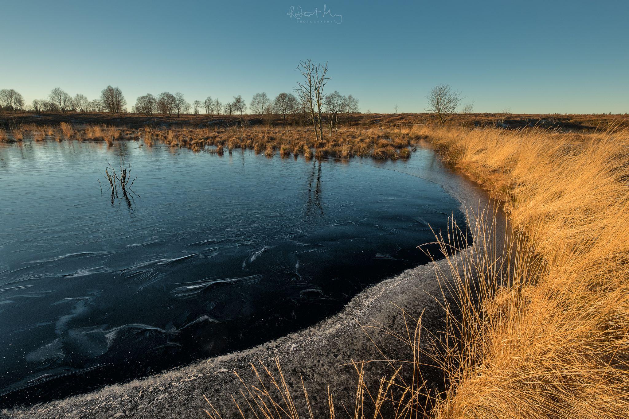 Hautes Fagnes - Dead Tree Lake, Belgium