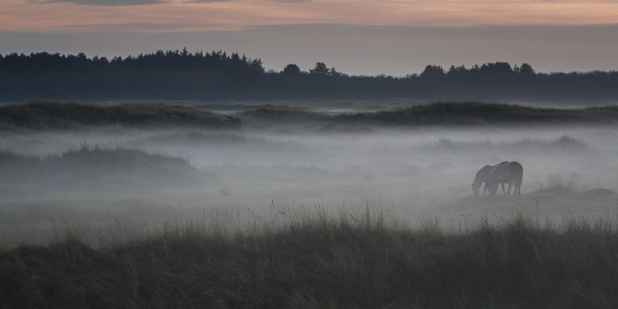 Dunes, Netherlands