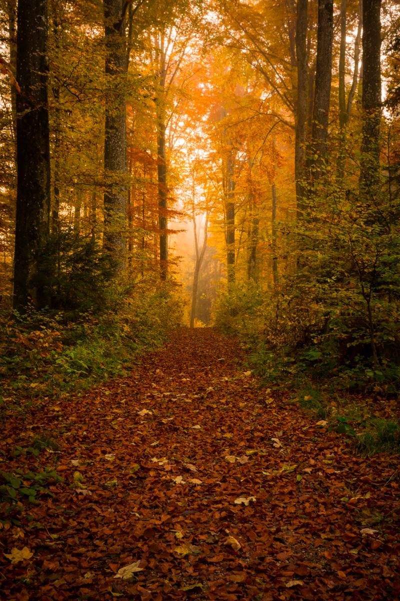 Autumn mood, Germany