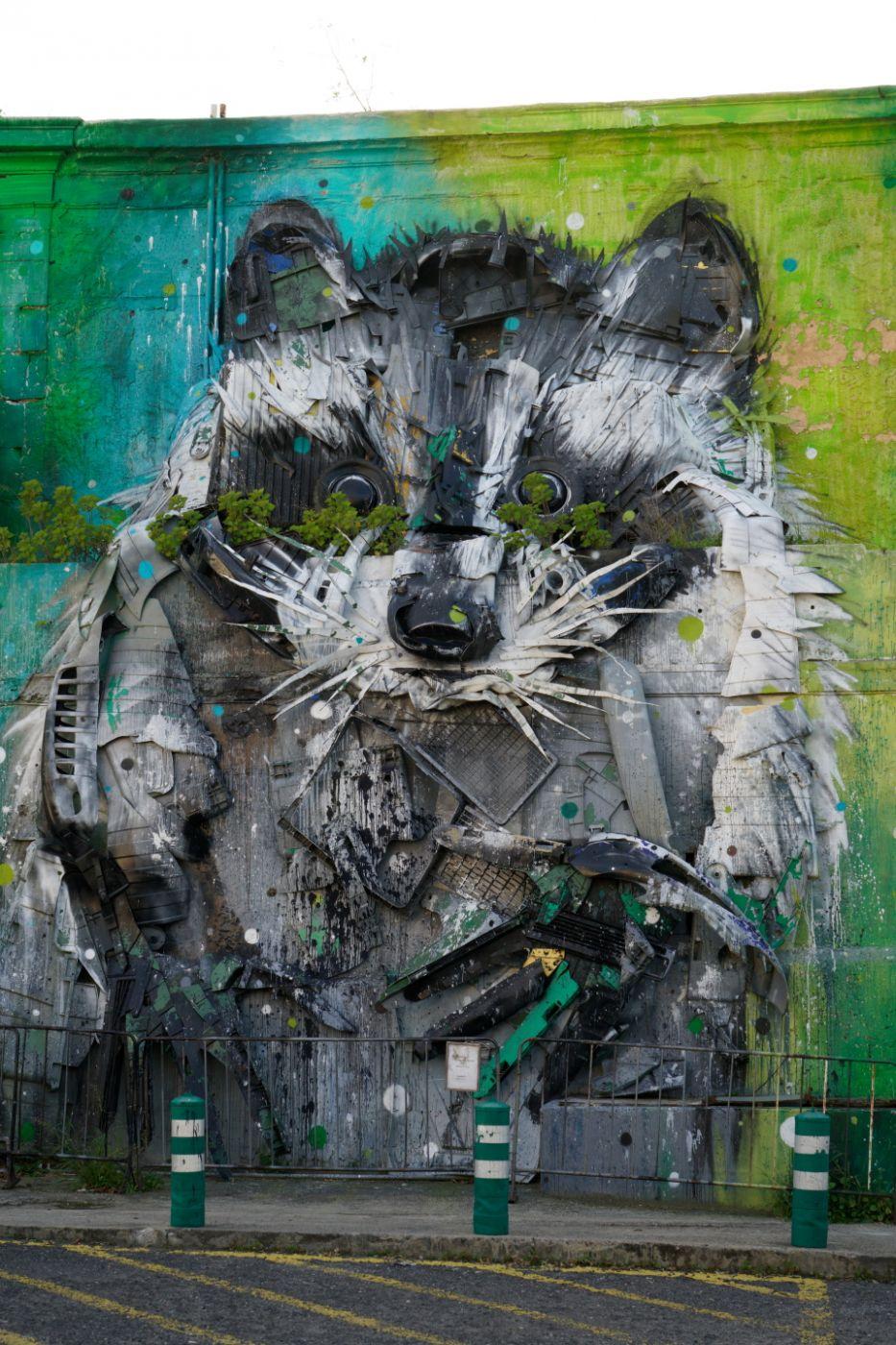 Raccoon, Portugal