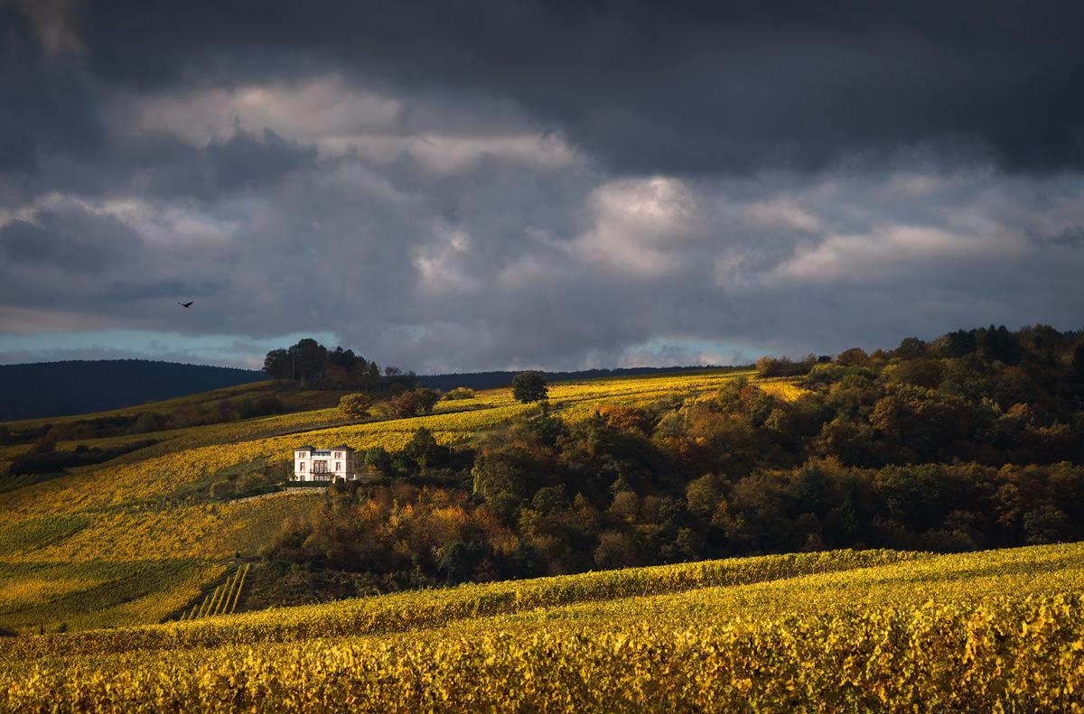 Rheingau vineyards, Germany