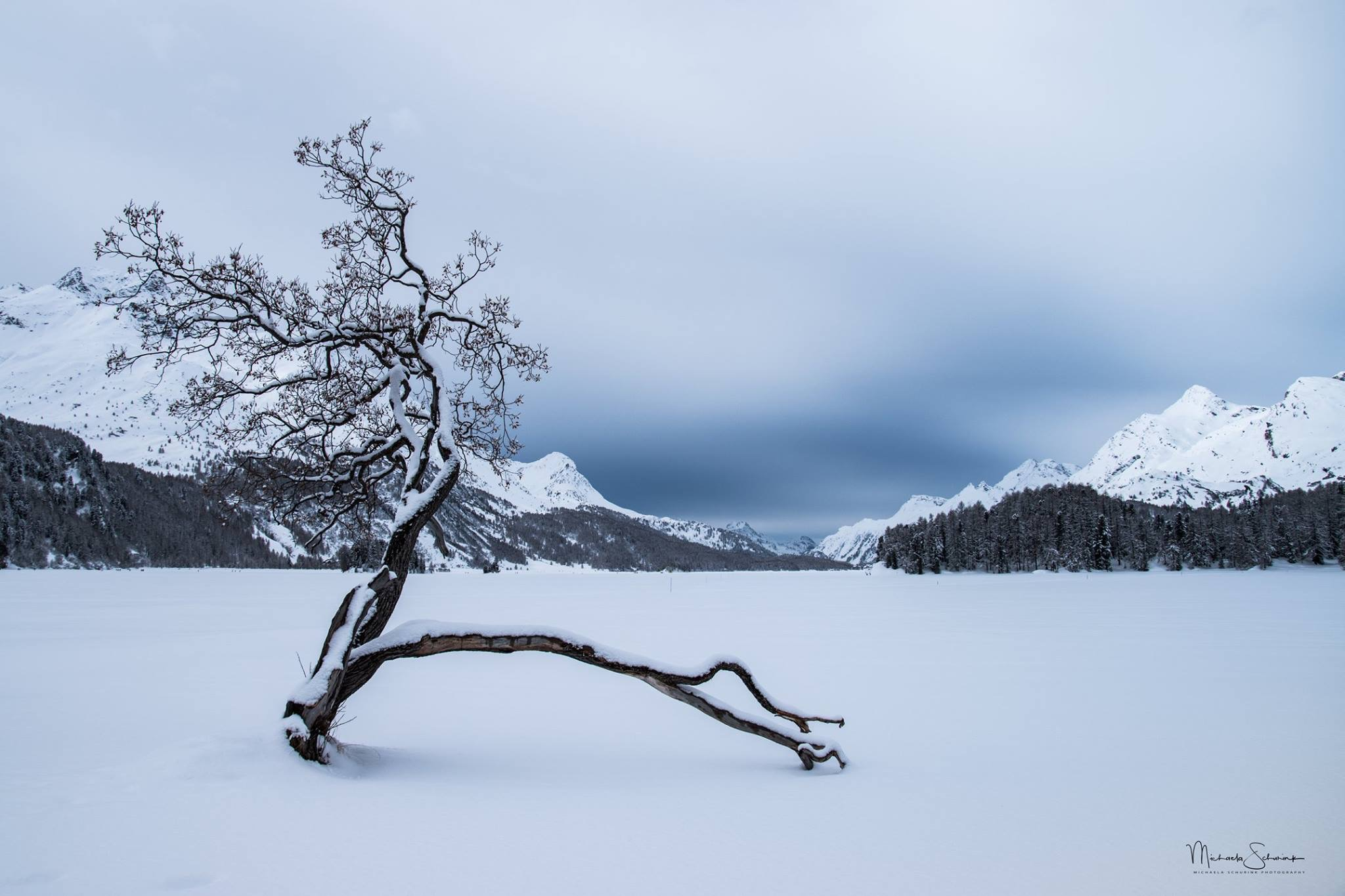 Magic tree at Silsersee, Sils Maria, Switzerland