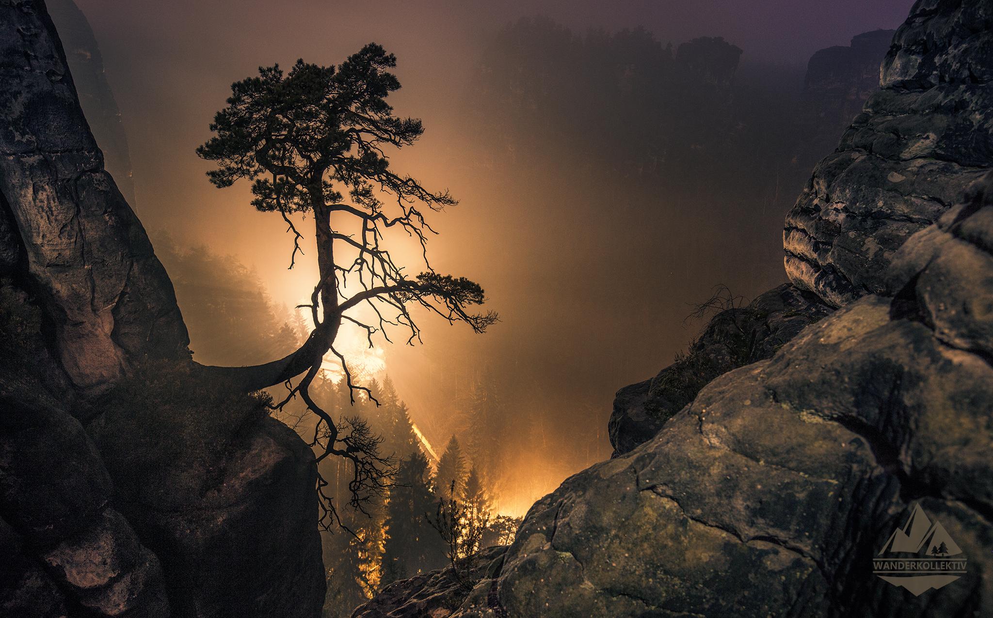 Wetterkiefer bei der Bastei  - Elbsandsteingebirge, Germany