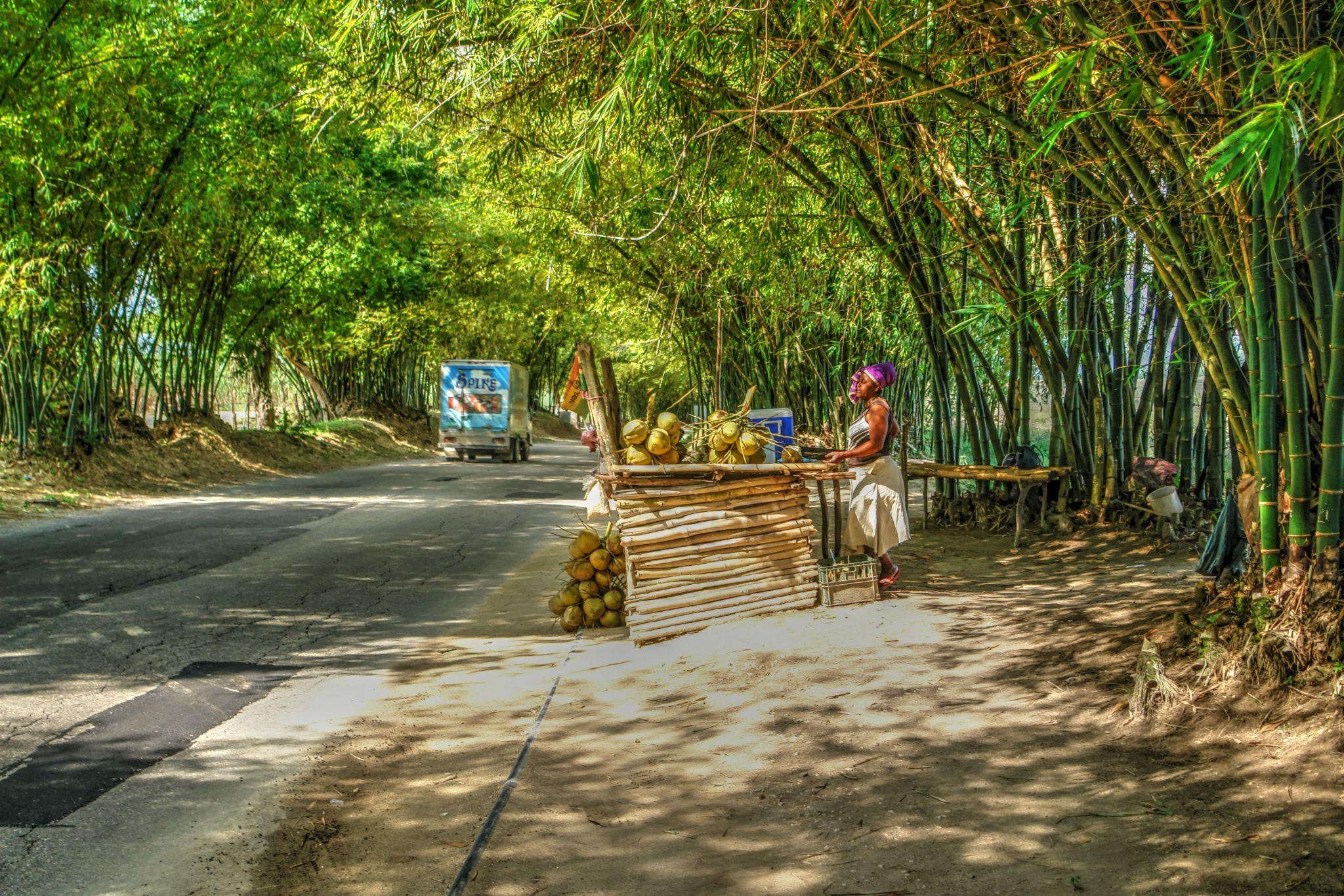 Bamboo Avenue, Jamaica, Jamaica