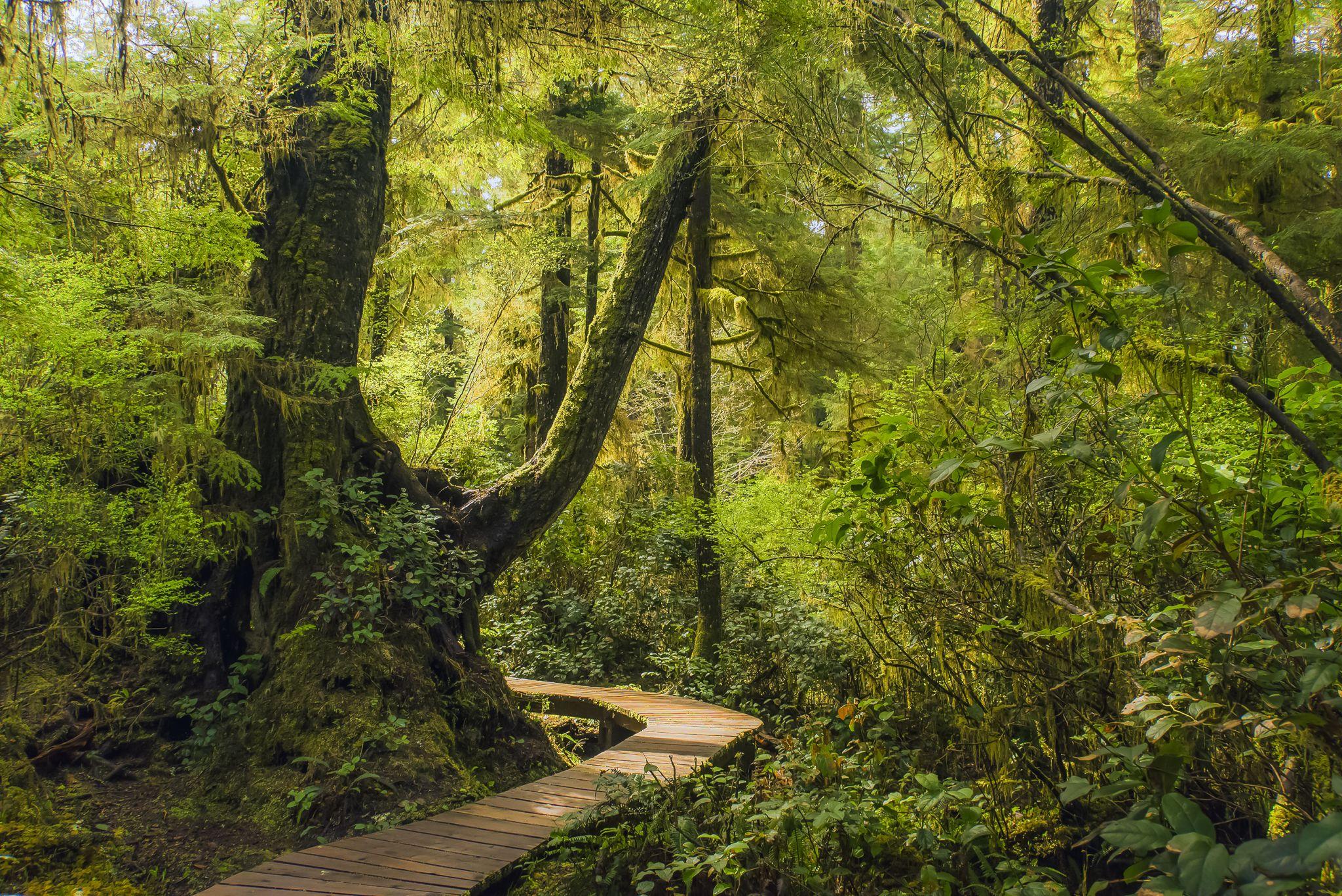 Boardwalk Trail to Schooner Bay, Canada