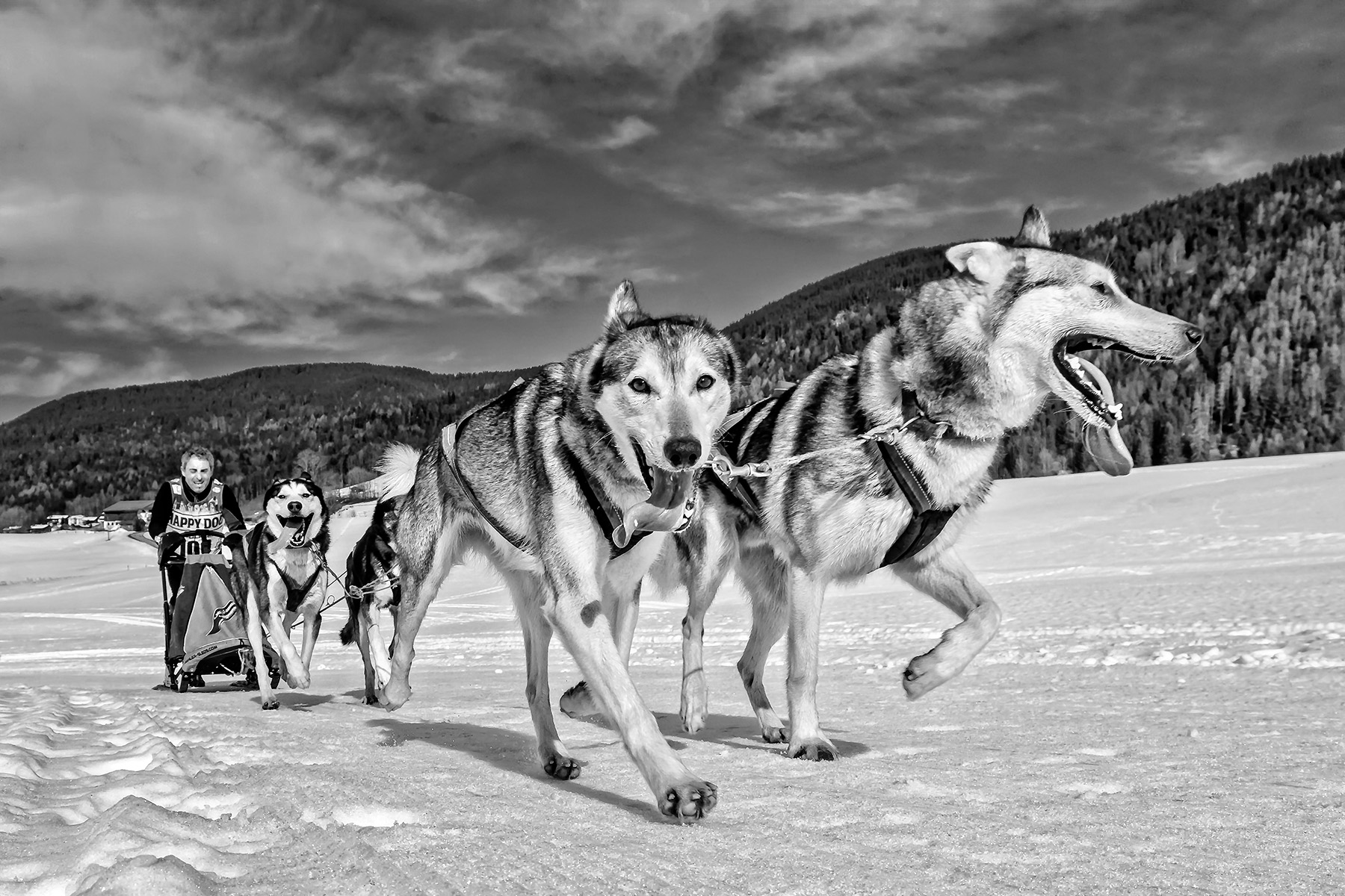 Inzell - Dog slide Track, Germany