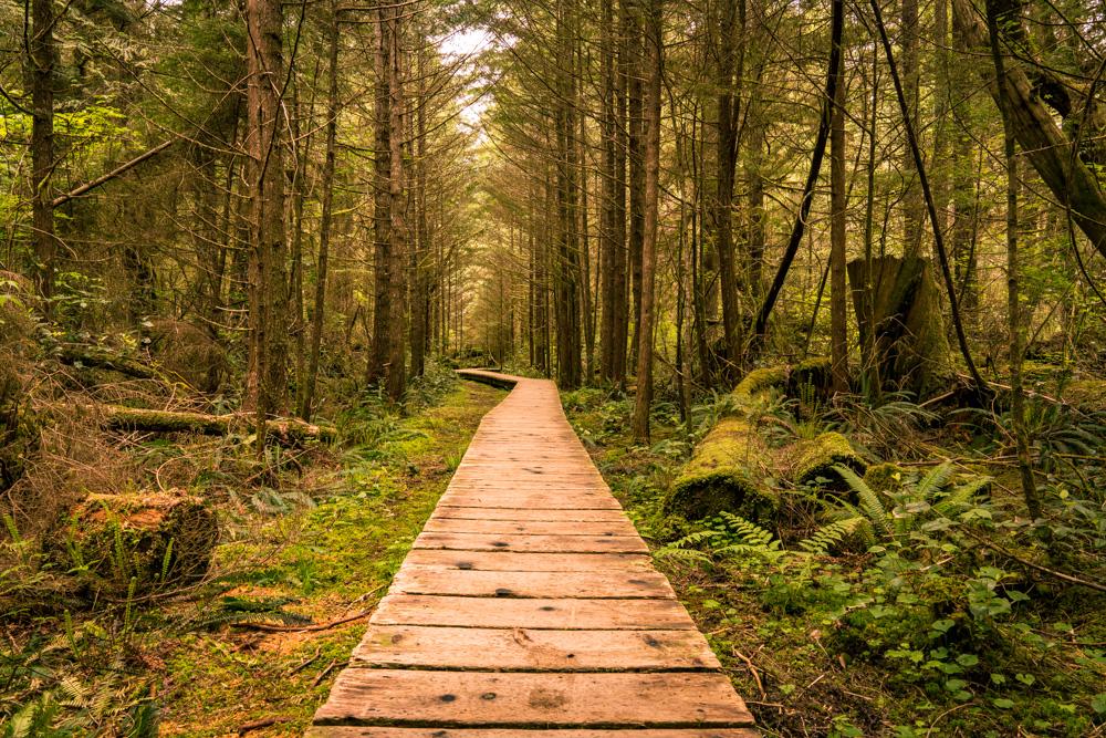Rainforest walk, Canada