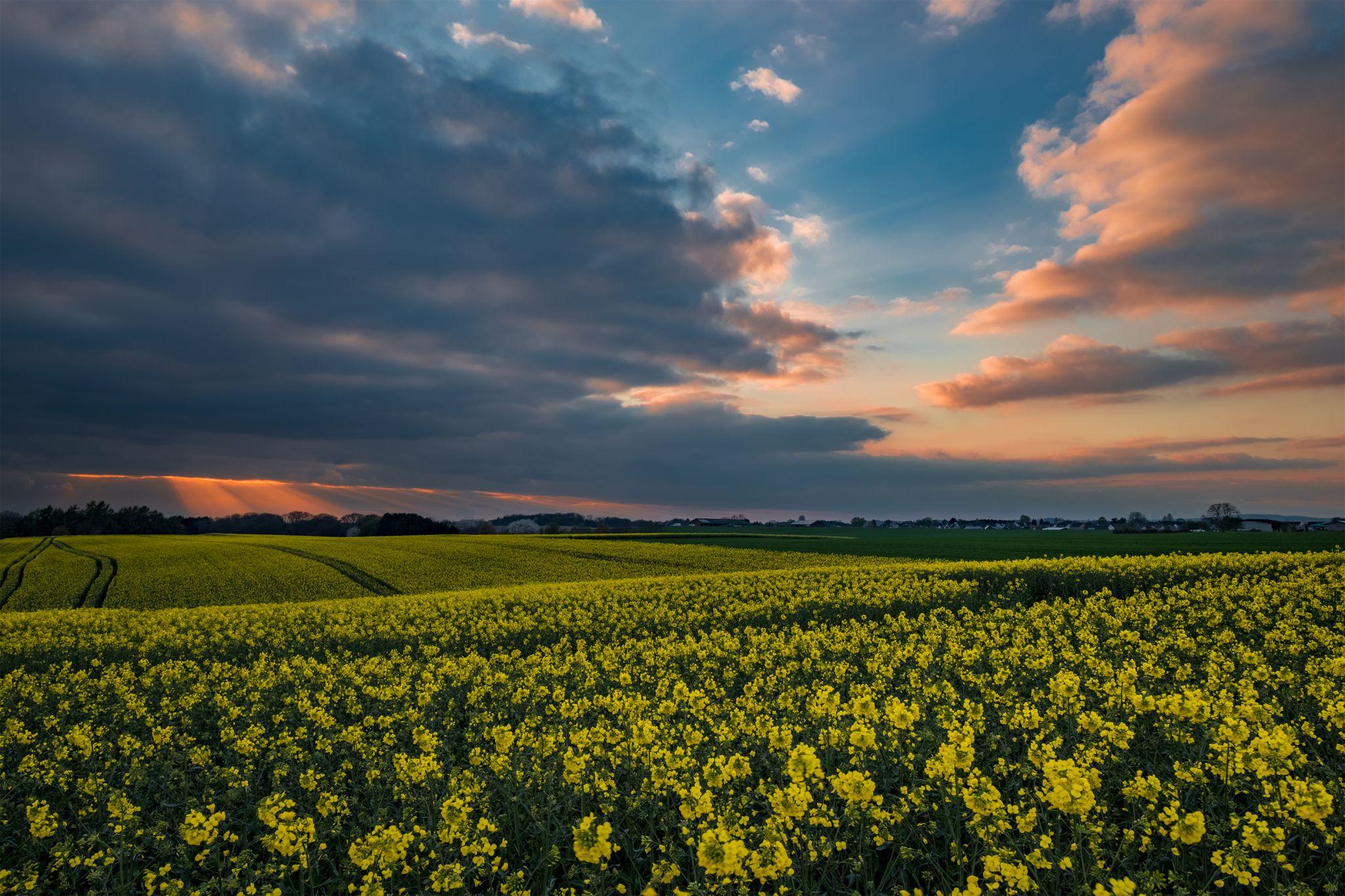 Lohmar Albach - Sunset Fields, Germany
