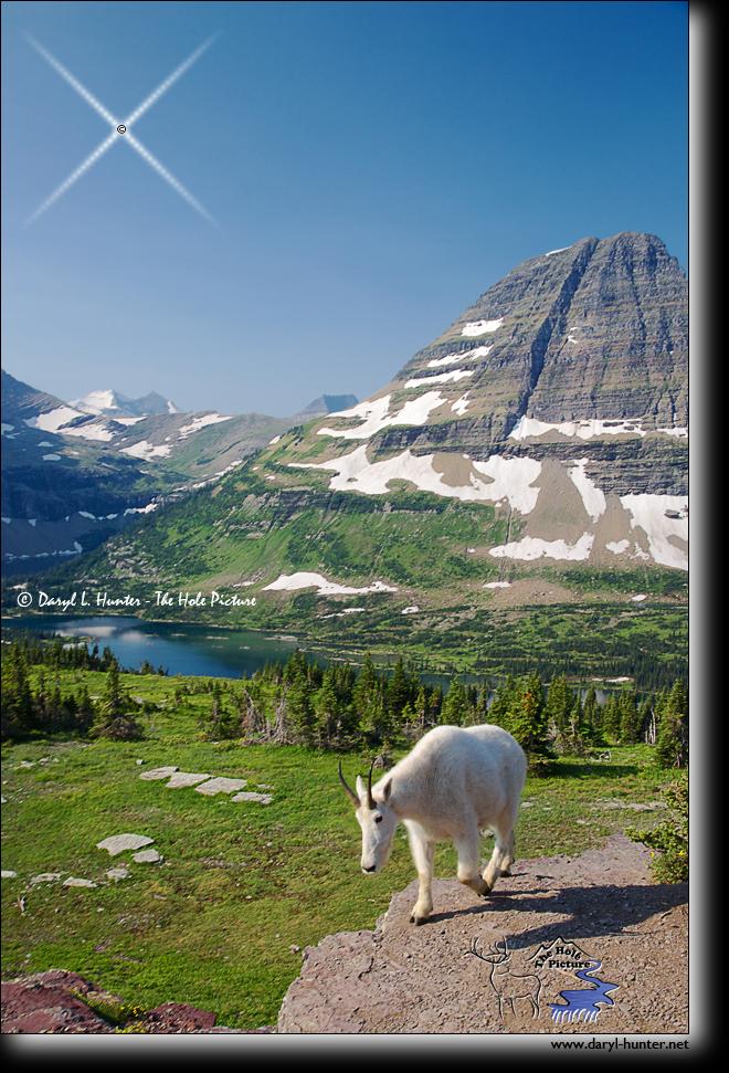 Hidden Lake Overlook, Glacier National Park, USA